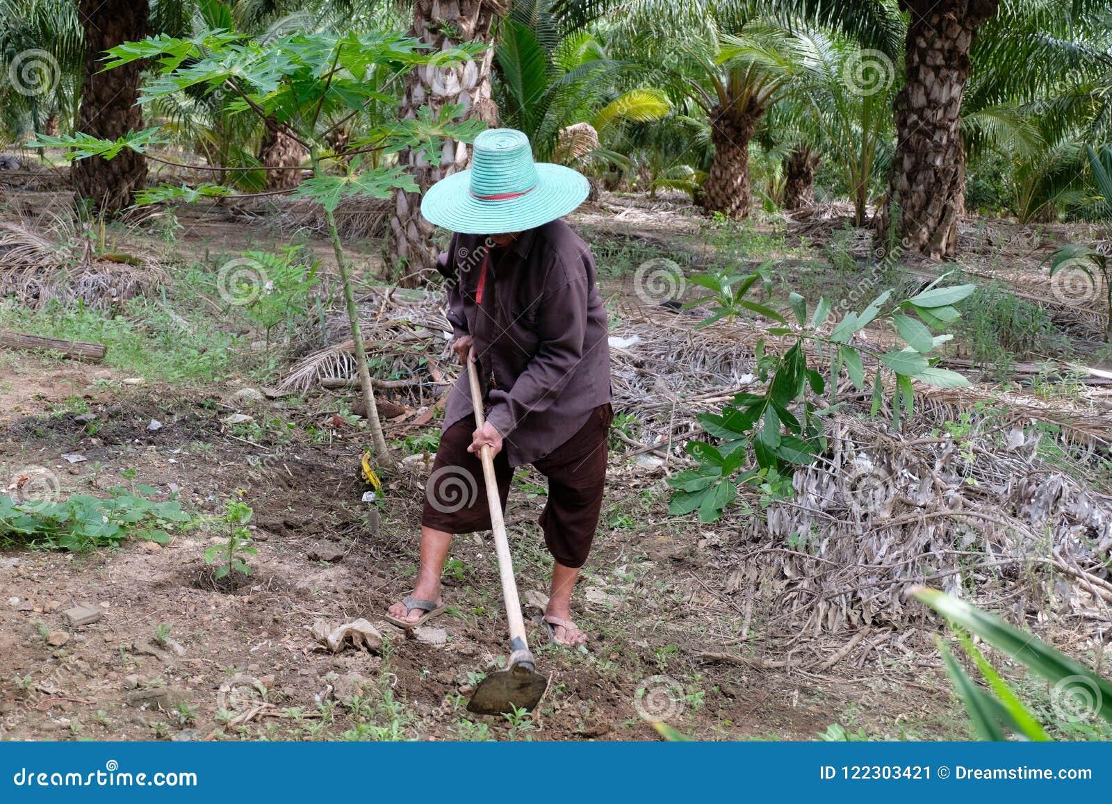 Trädgårds- gammal kvinnaworking