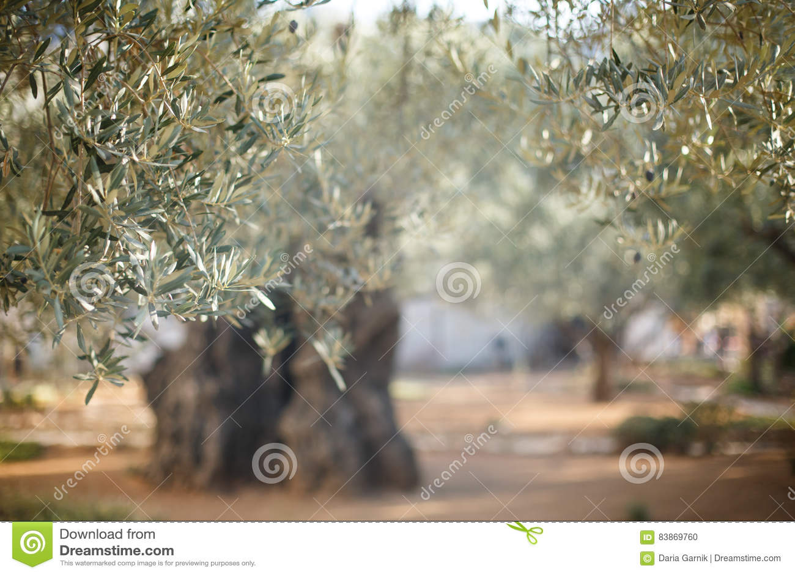 Trädgårds- gethsemane Berömt historiskt ställe