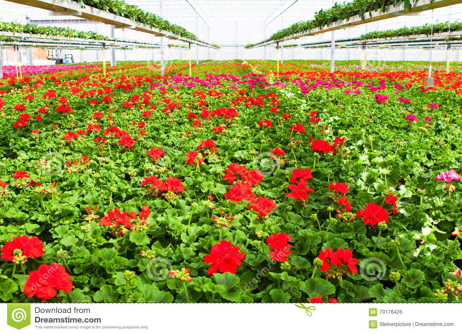 Trädgårds- mitt
