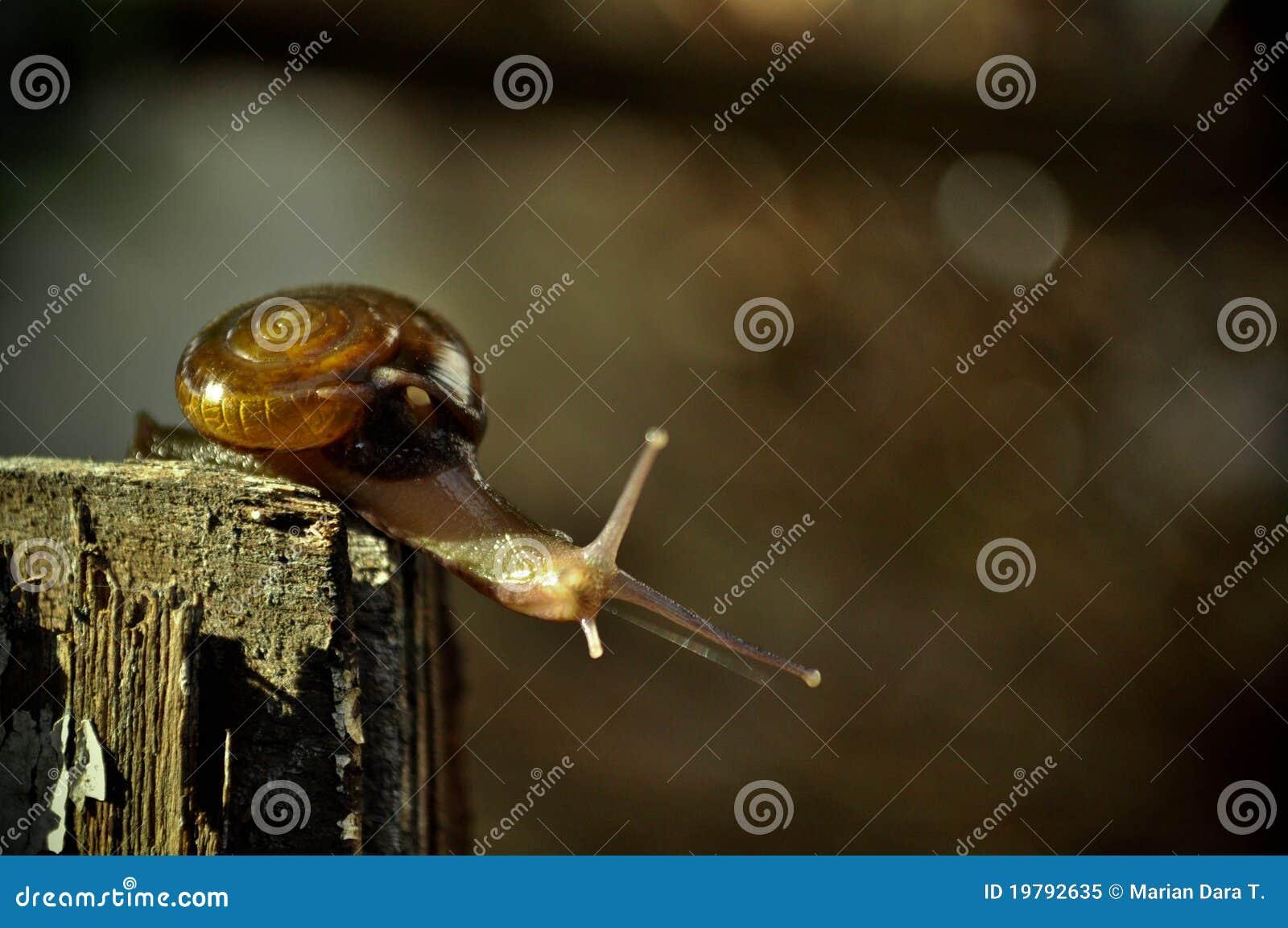 Trädgårds- snailgård