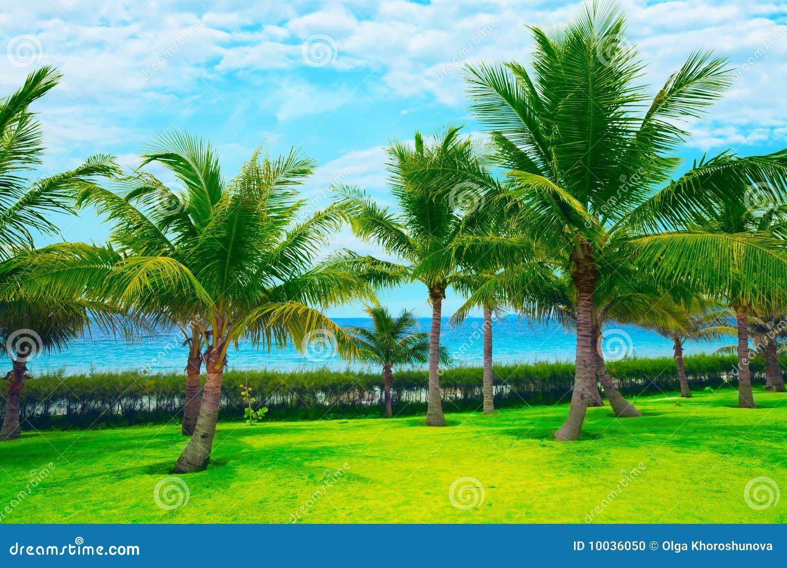Trädgårds- tropiskt