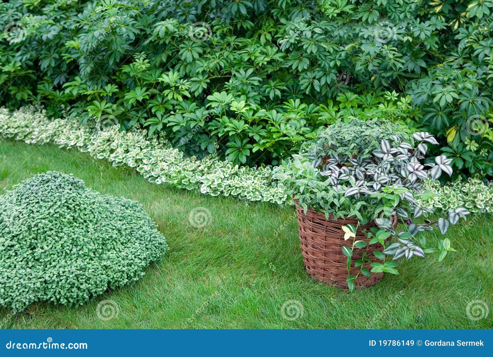 Trädgårds- växter