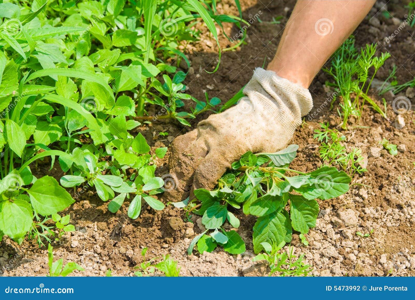 Trädgårds- weeding
