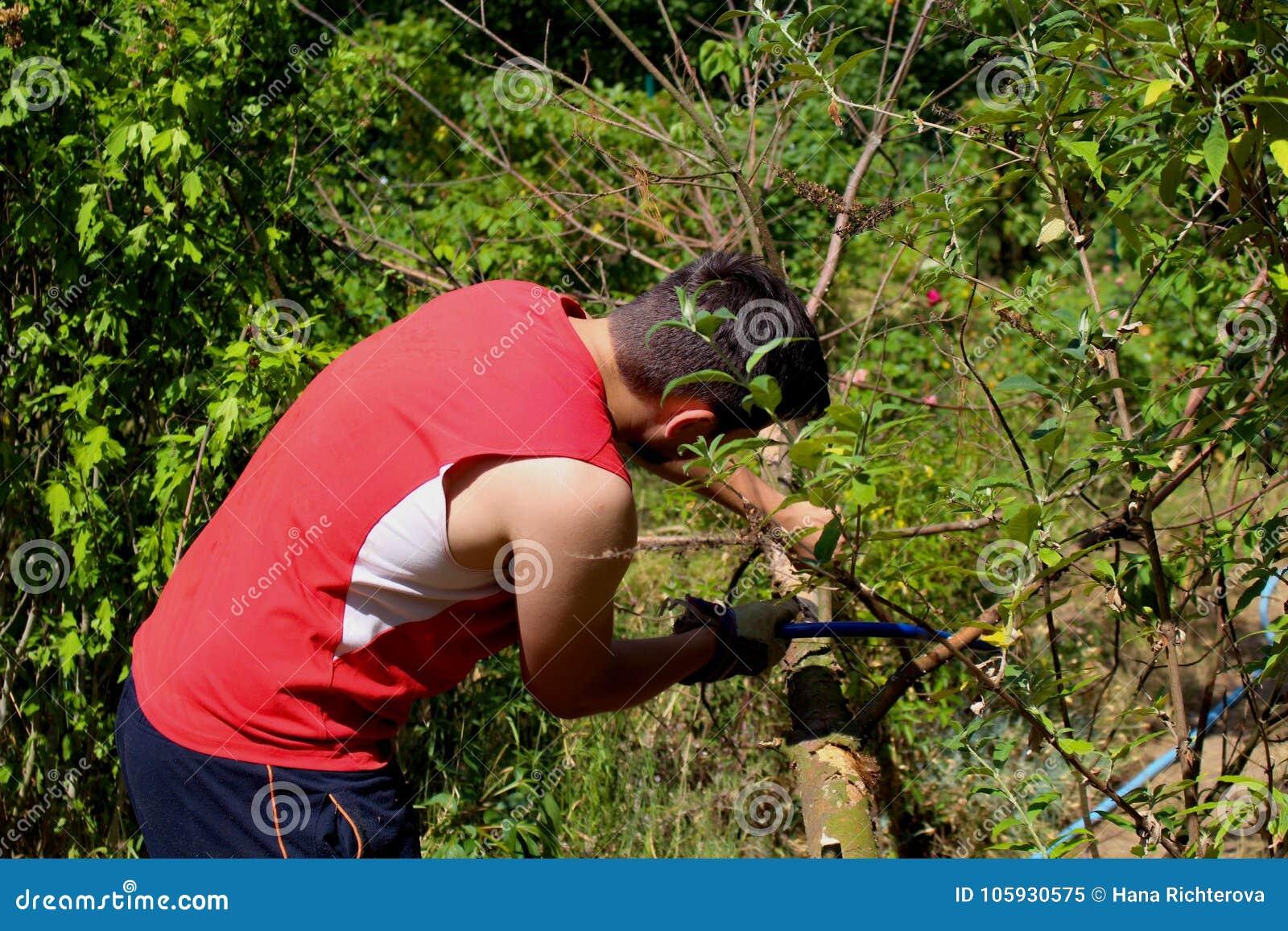 Trädgårdsmästare som arbetar i grönsakträdgården Höst som arbeta i trädgården, begrepp för organiskt lantbruk Det organiska lantb