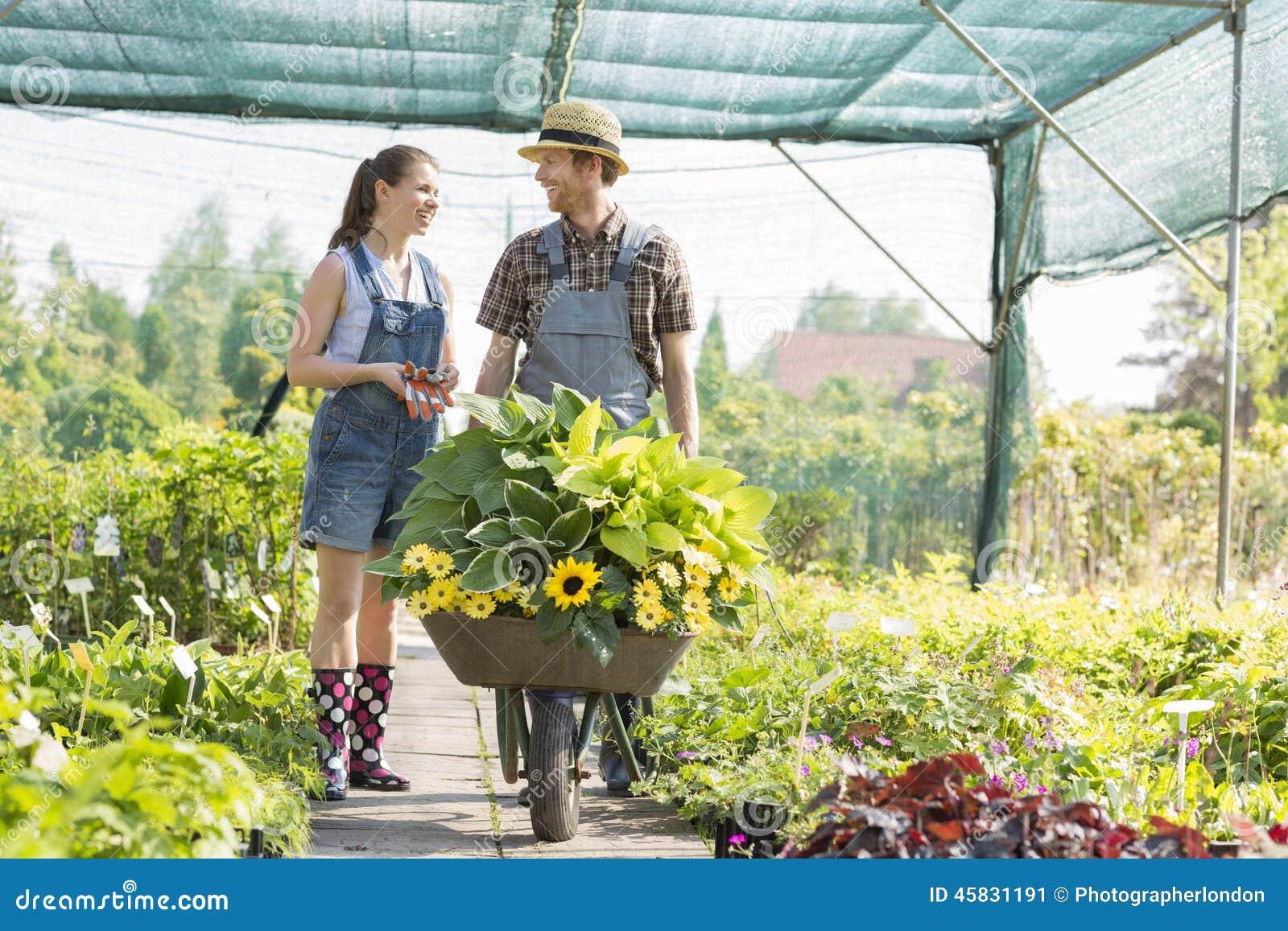 Trädgårdsmästare som diskuterar, medan skjuta växter i skottkärra på växthuset