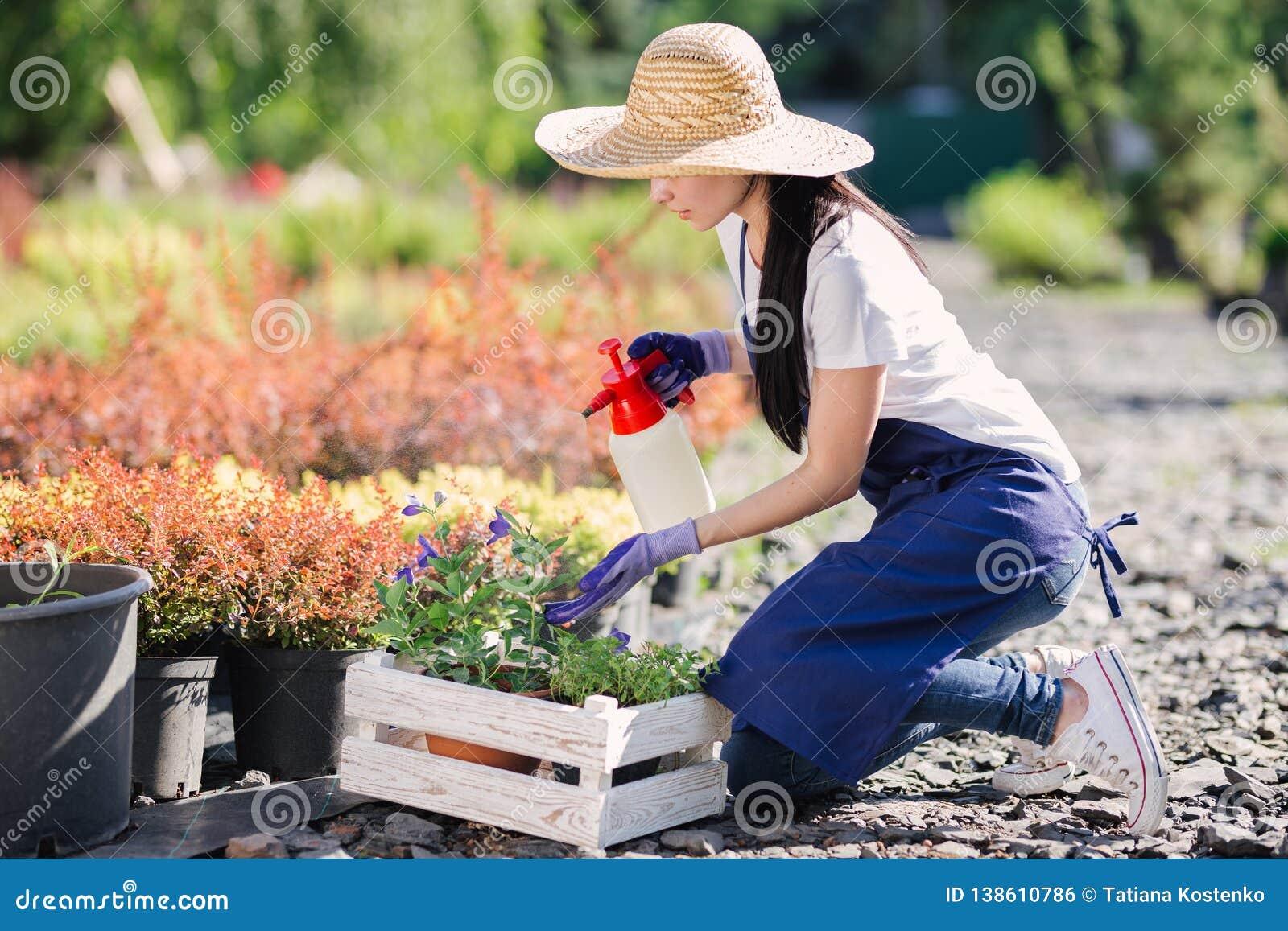 Trädgårdsmästarekvinnan strilar blommor från en trädgårdsprejare, stänger sig upp fotoet
