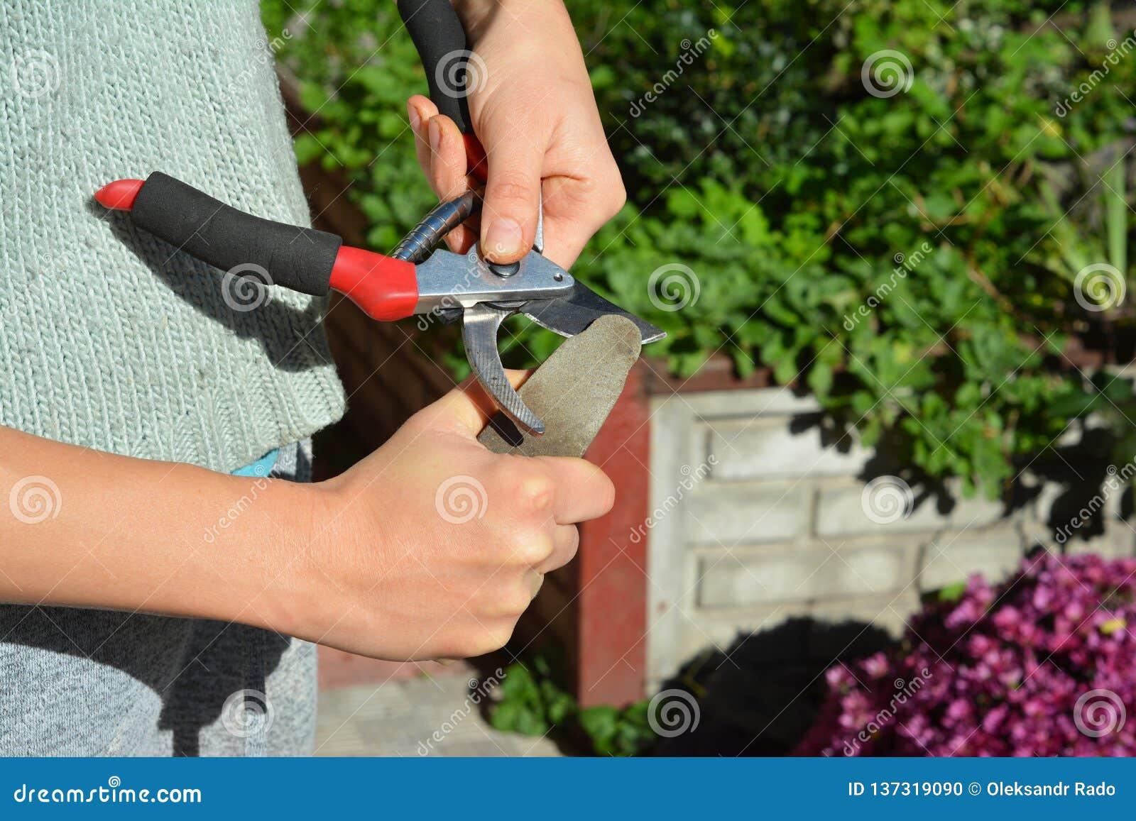 Trädgårdsmästarelokalvård och vässa trädgårdhjälpmedlet i höst