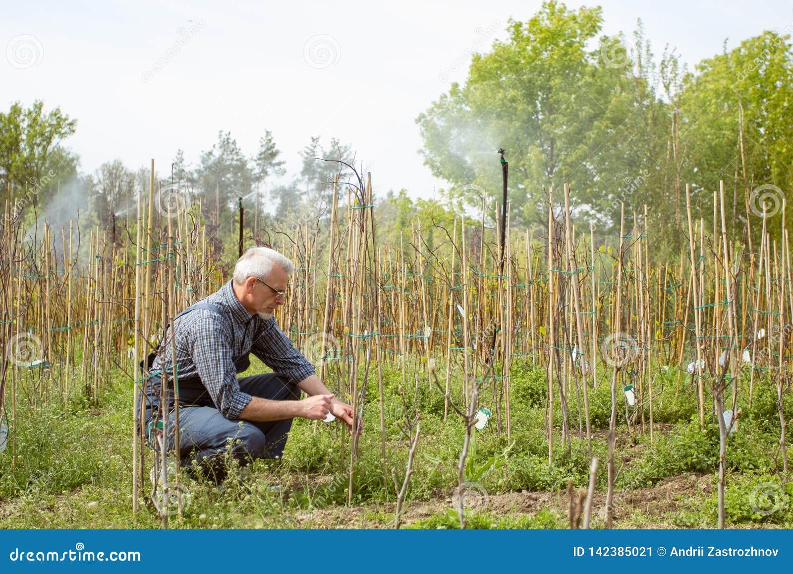 Trädgårdsmästaren behandlar unga växter Drivbänk av växter