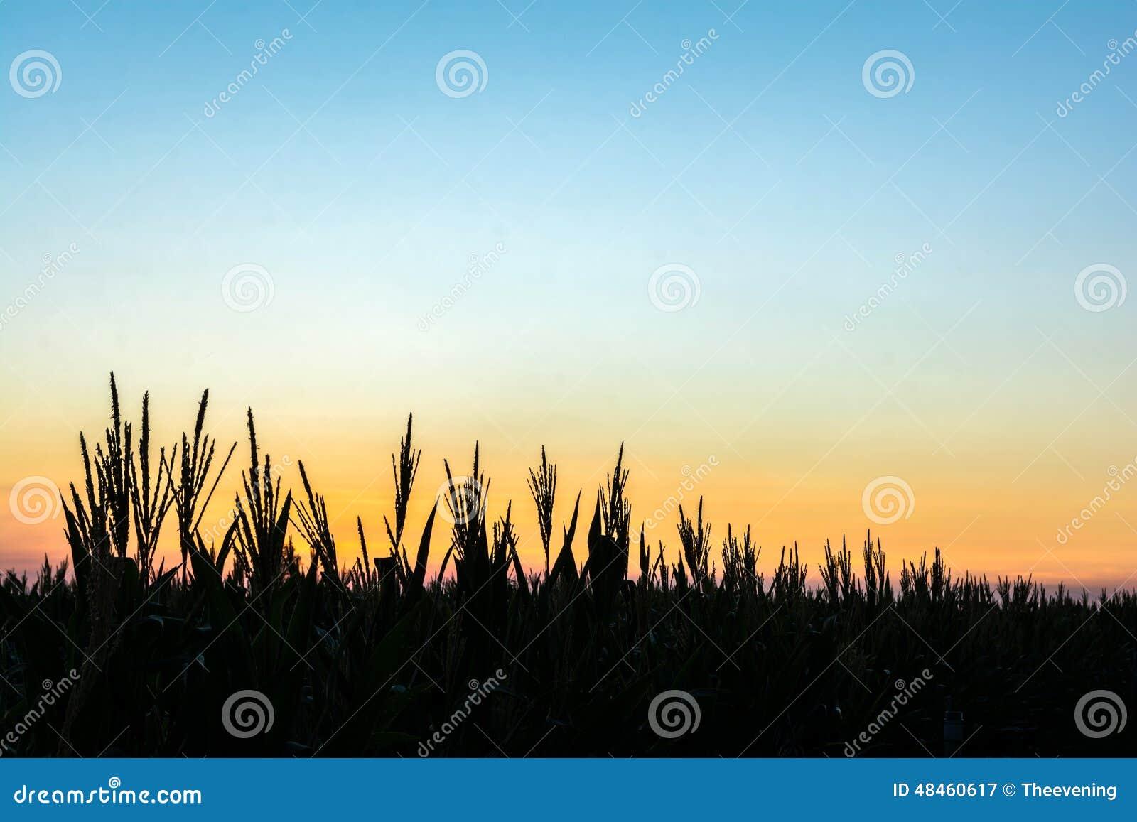 Trädkonturer med himlen