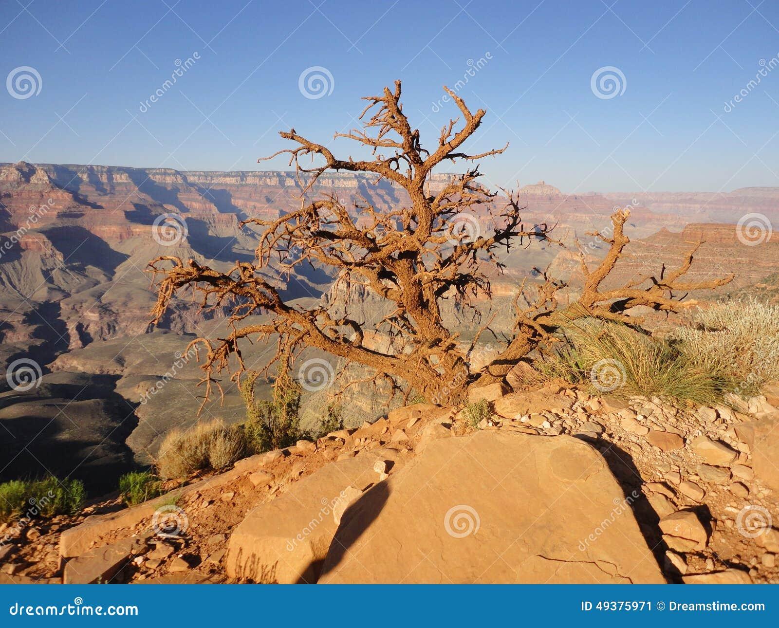 Träduppehälle i Grand Canyon