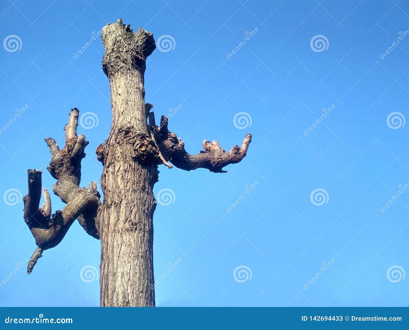 Trästruktur för härligt fantastiskt träd i himmel