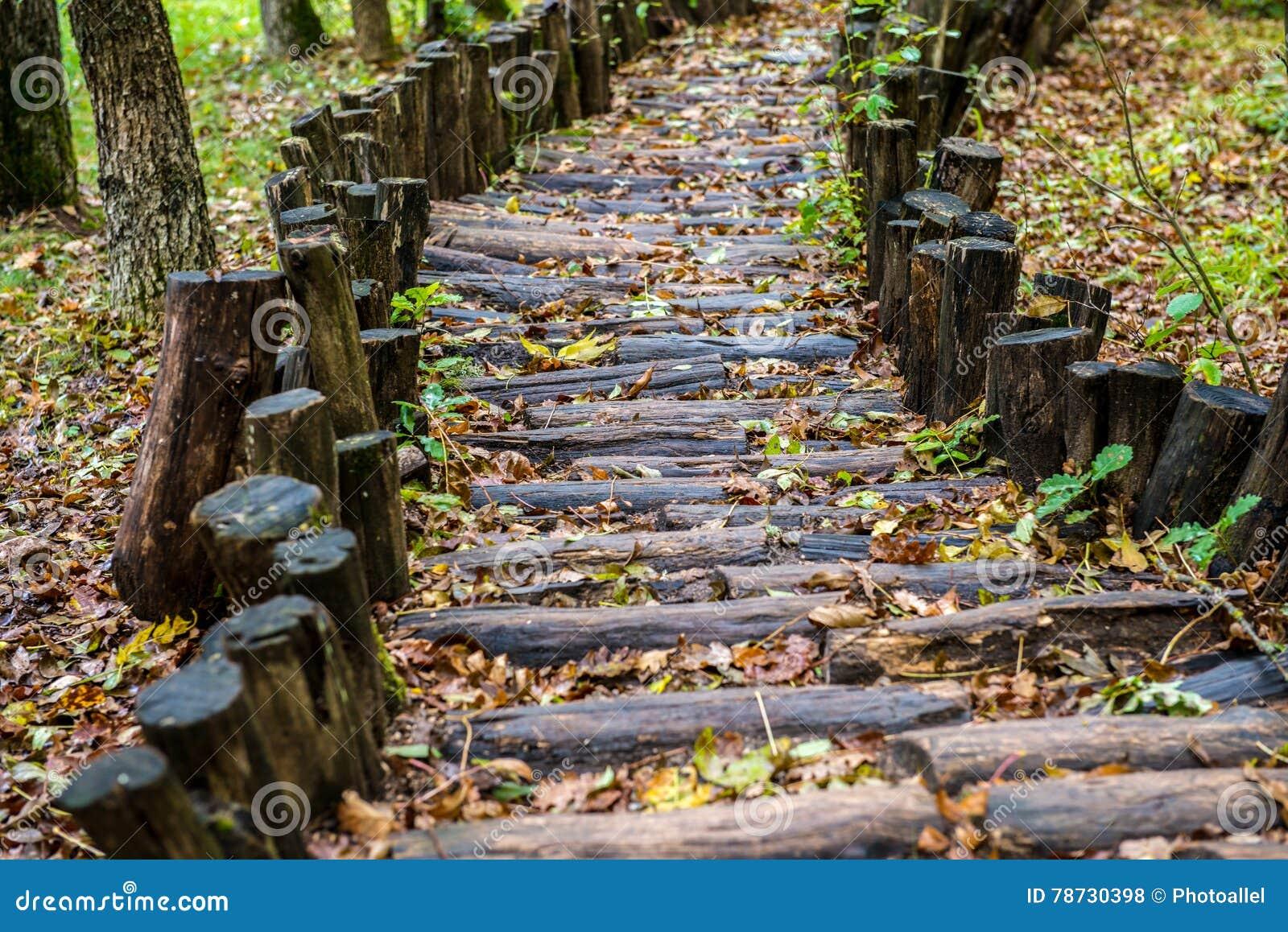 Trävandringsled i skogen som behandlar foten