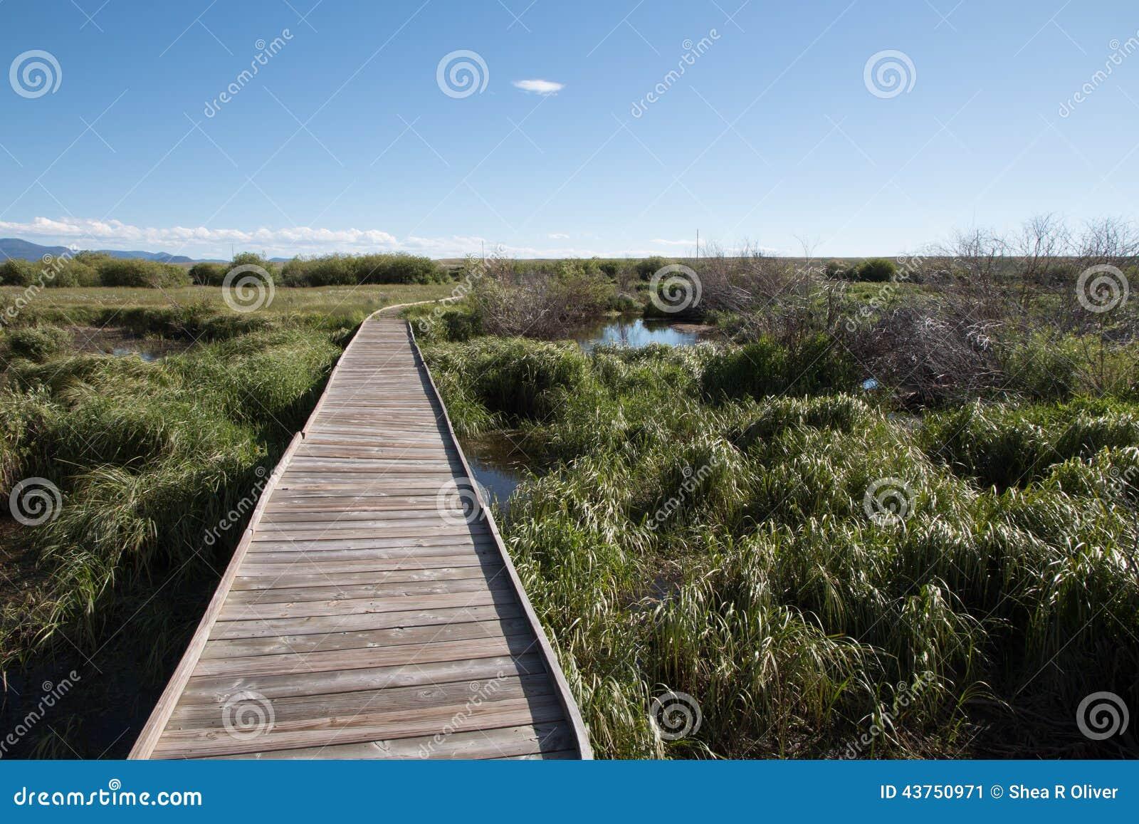 Trävandringsled till och med strand- område