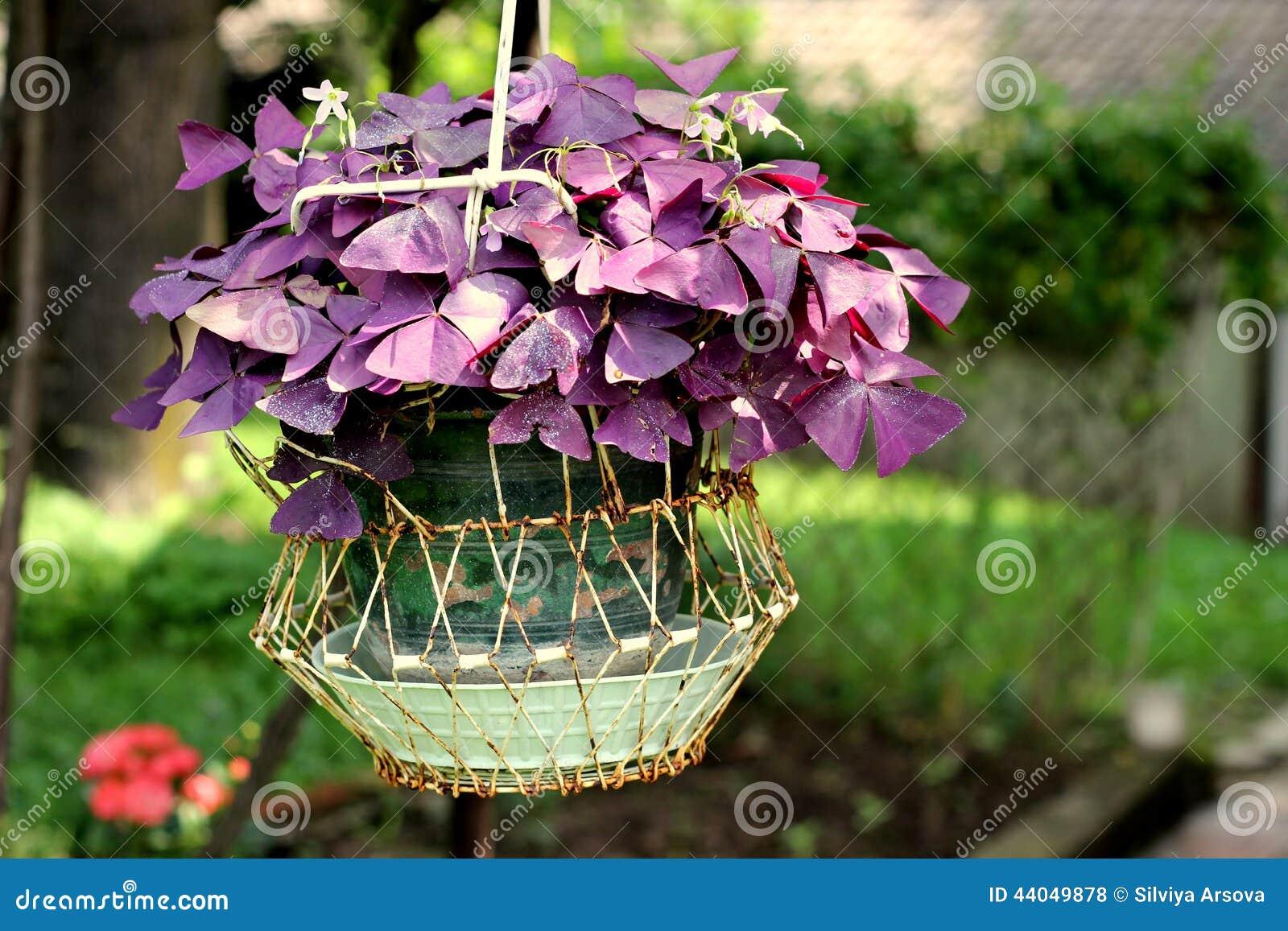 Bonito Púrpura Oscuro Uñas Foto Viñeta - Ideas Para Pintar Uñas ...