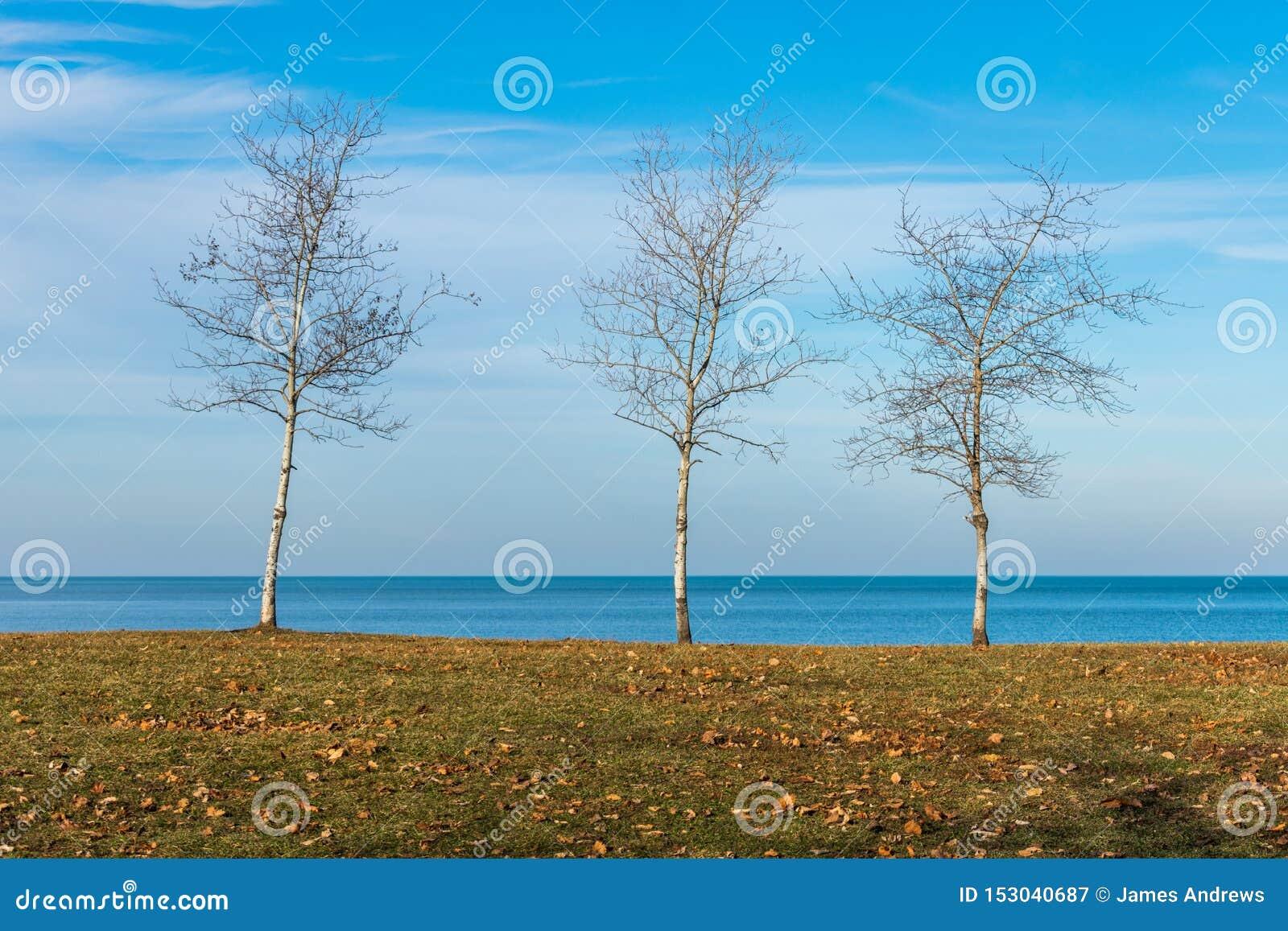 Três árvores desencapadas ao longo da costa do Lago Michigan em Chicago