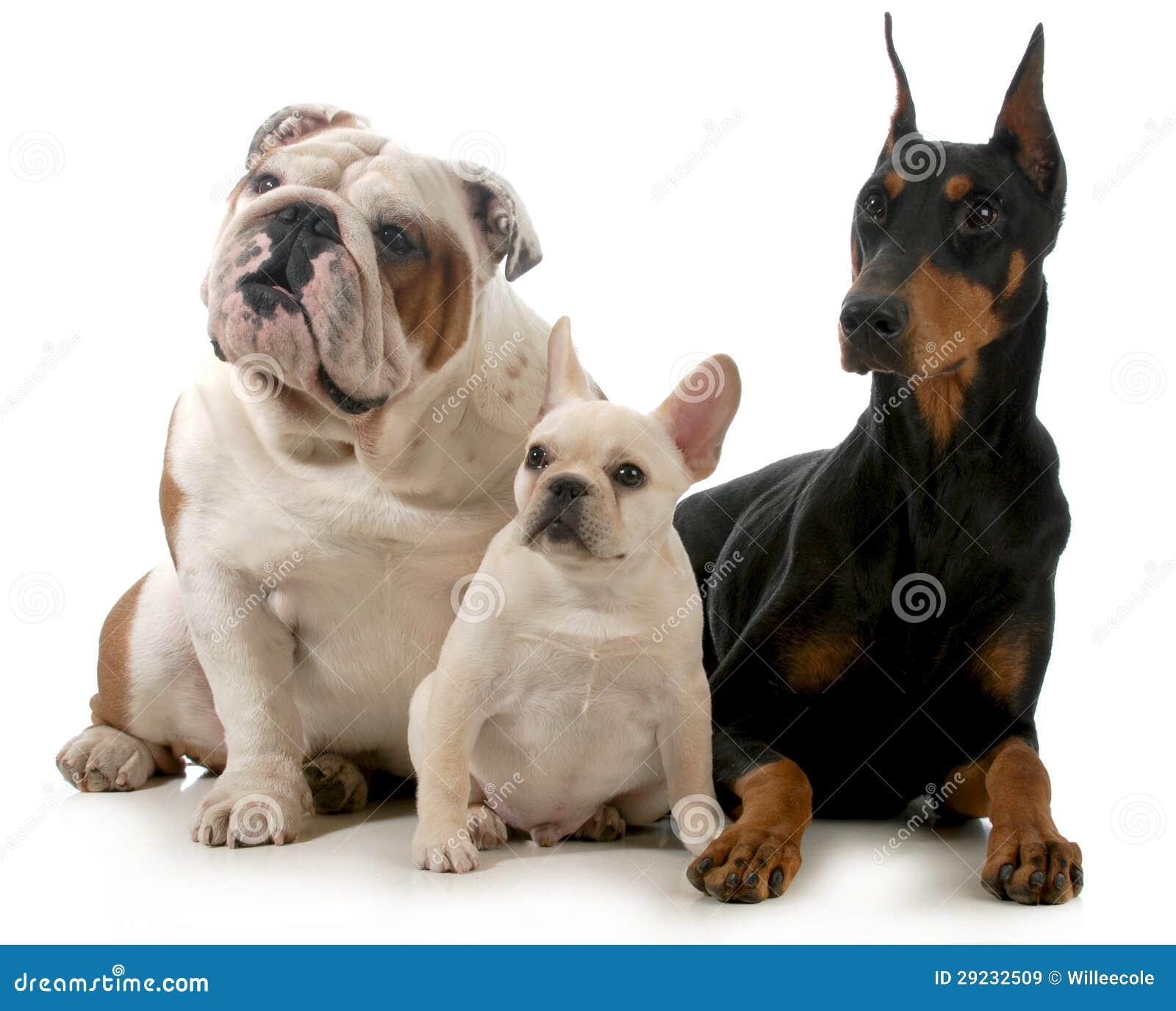 Download Três cães imagem de stock. Imagem de down, bulldog, fundo - 29232509