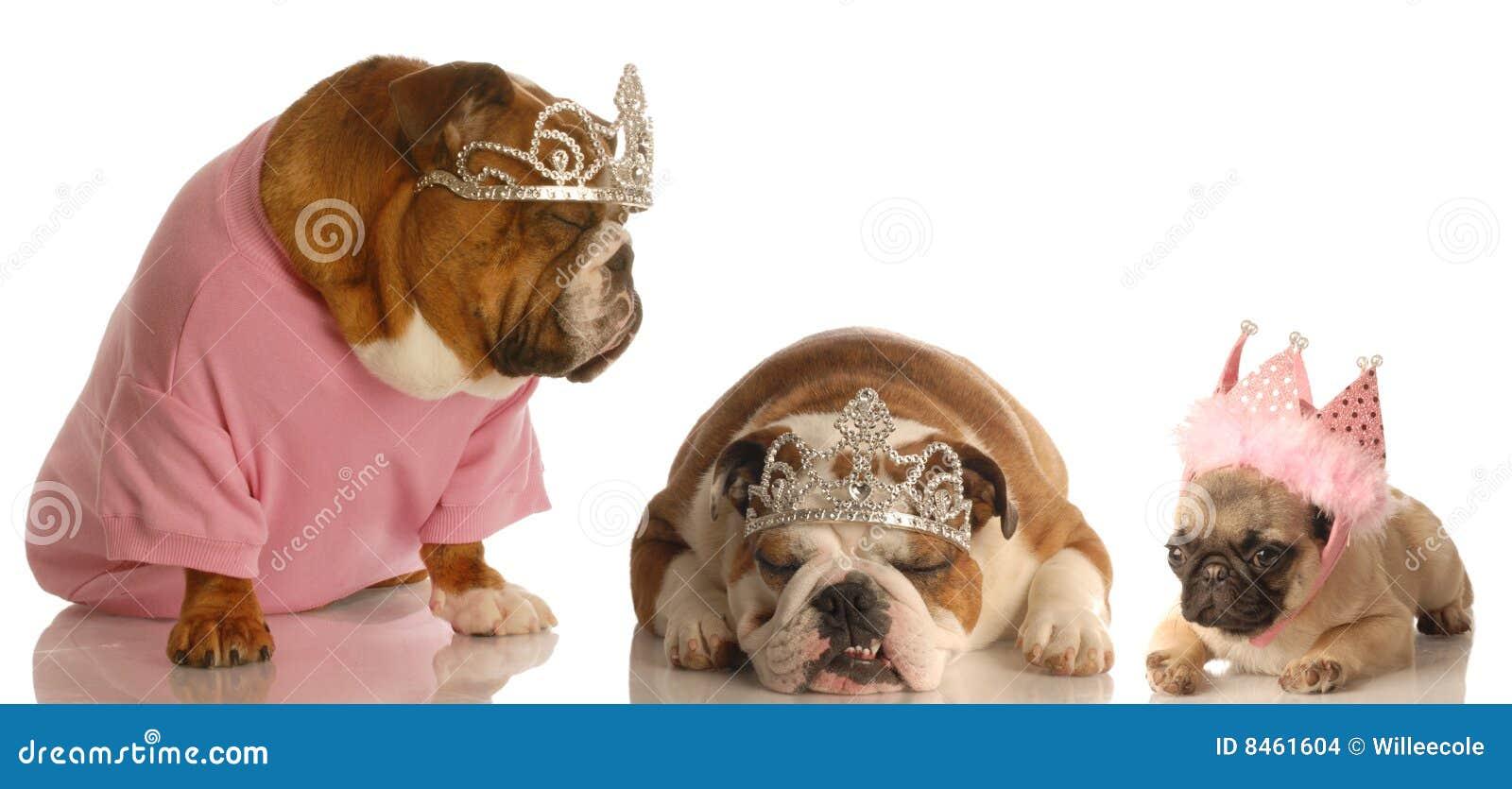 Três cães estragados