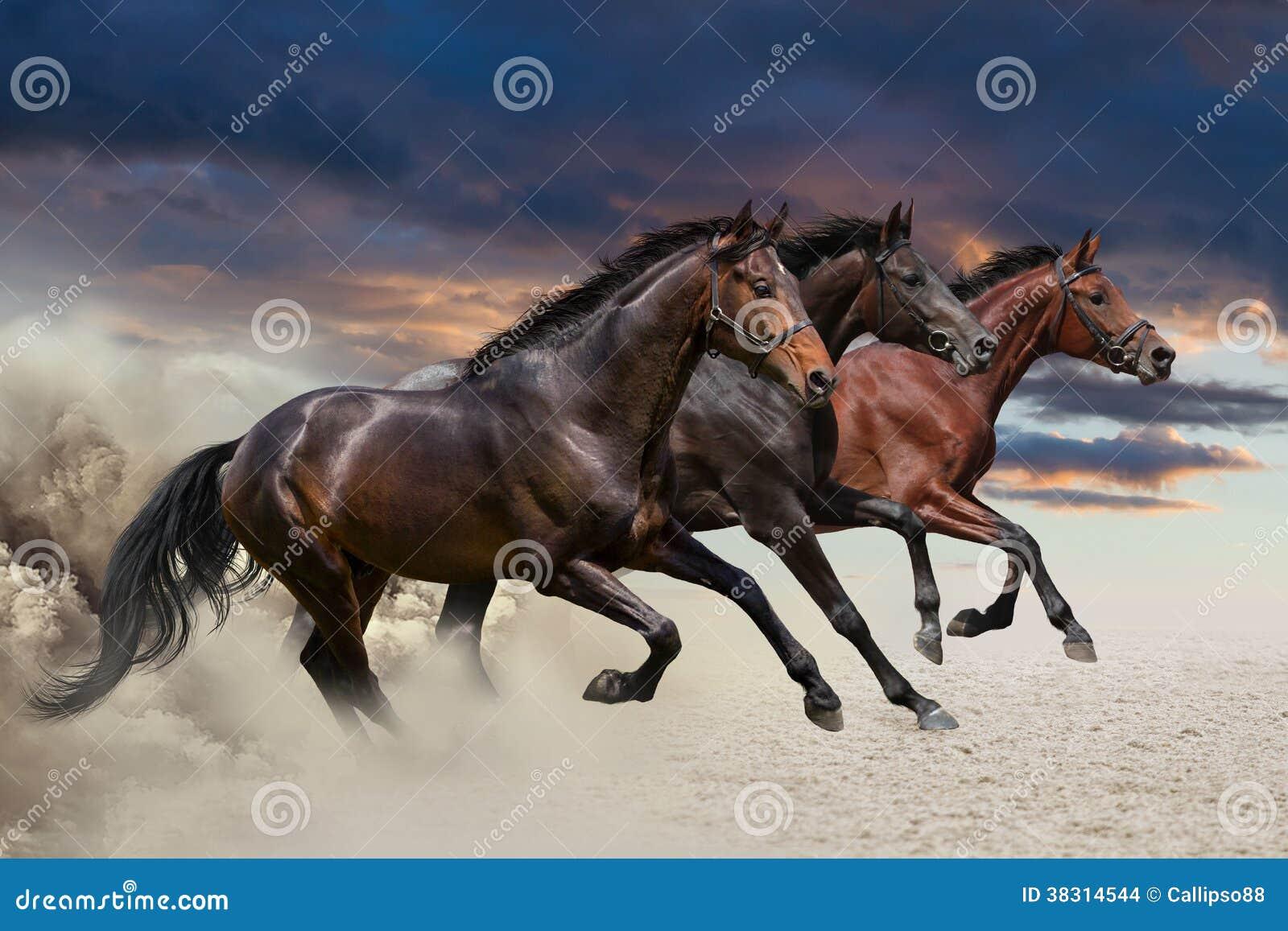 Três cavalos que correm em um galope