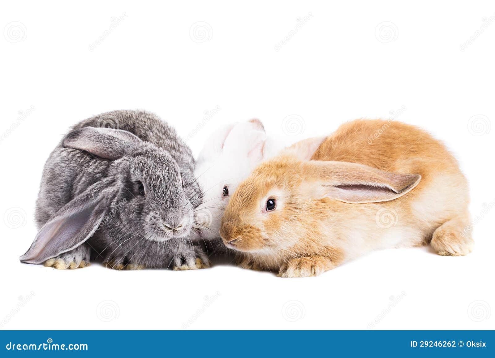 Download Três coelhos foto de stock. Imagem de pouco, bunny, hare - 29246262