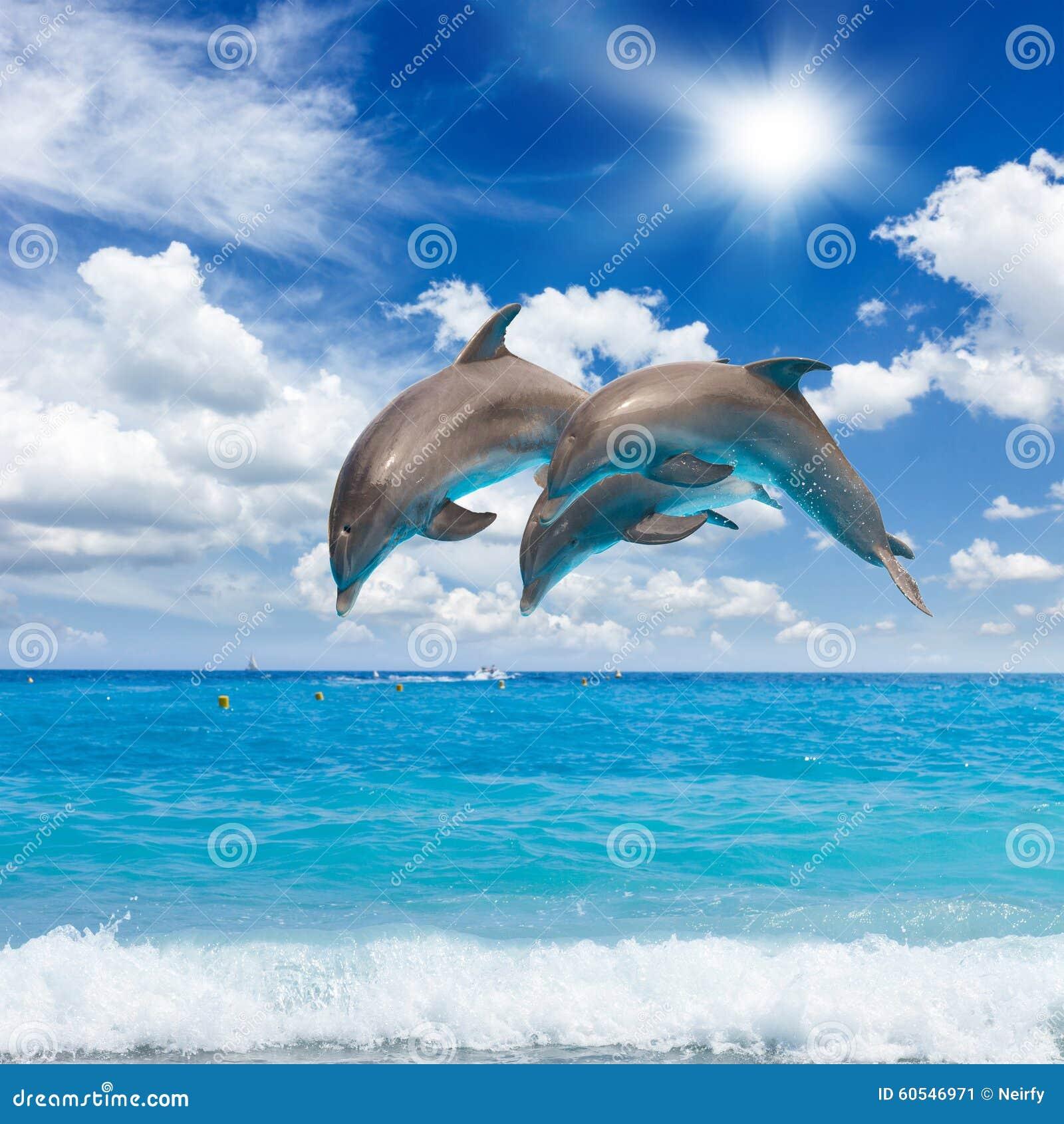 Três golfinhos de salto