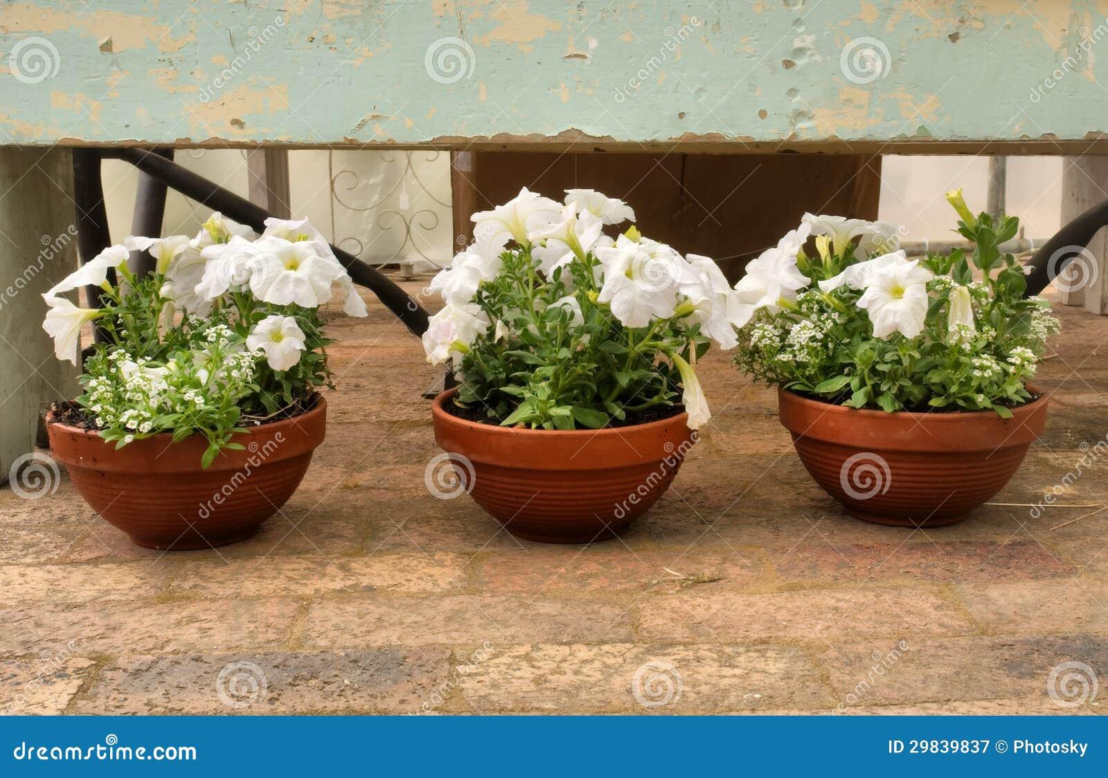 Três potenciômetros de flor