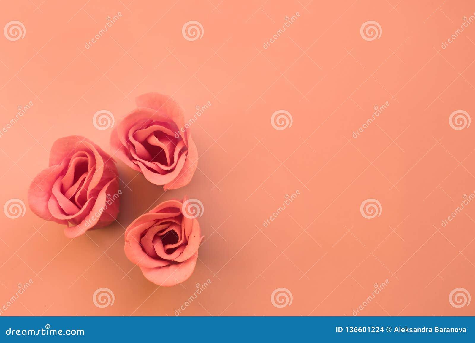 Três rosas cor-de-rosa no fundo coral com espaço da cópia