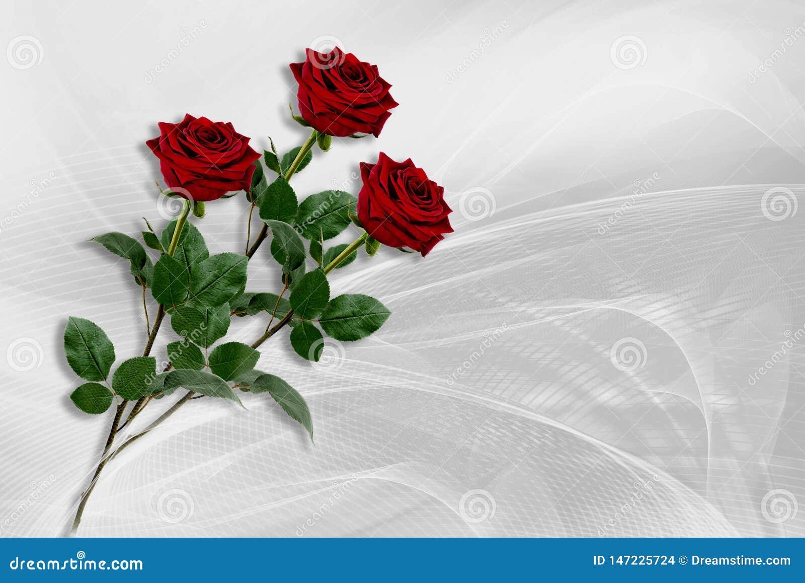 Três rosas vermelhas encontram-se em um fundo cinzento-branco