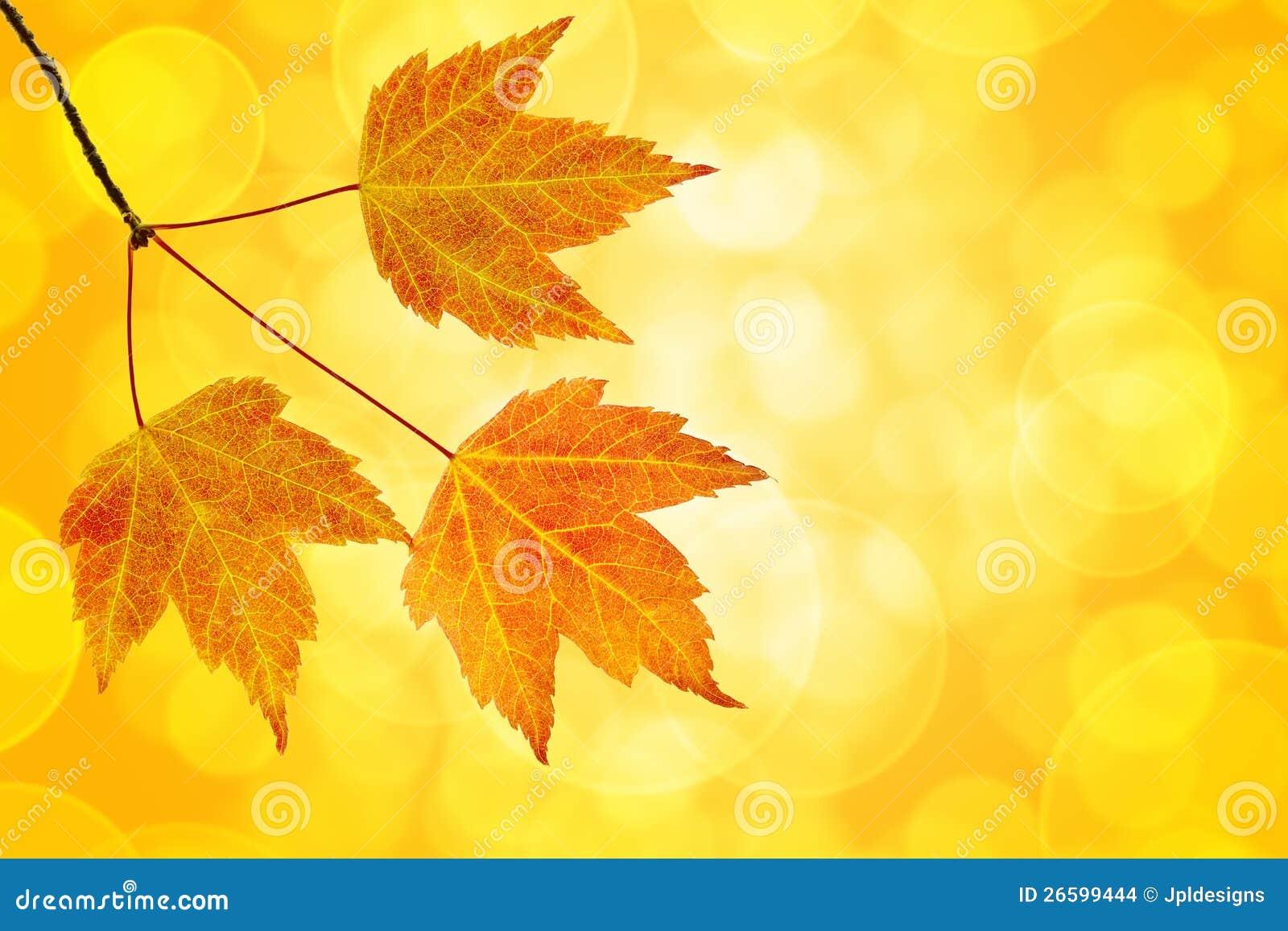 Trío de las hojas de arce de la caída con el fondo de Bokeh