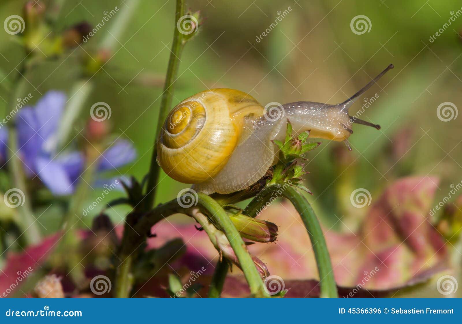 Traînée d escargot