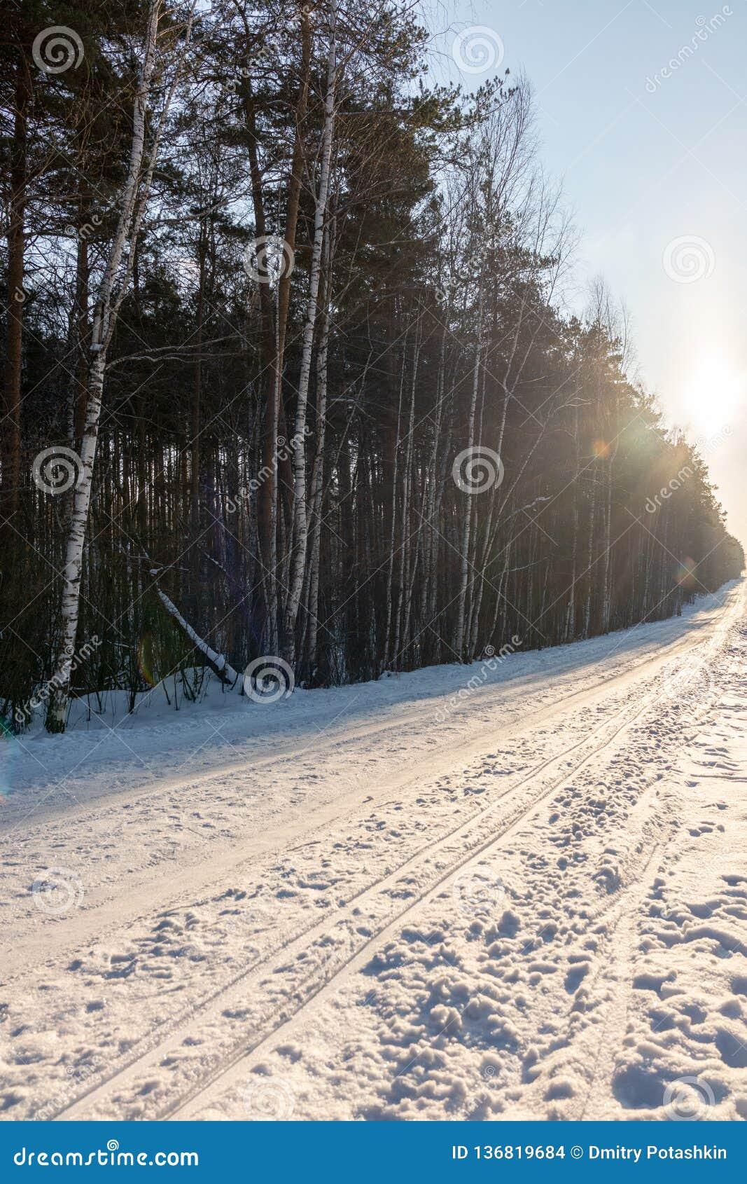 Traînée directe de ski dans les bois d hiver au jour ensoleillé