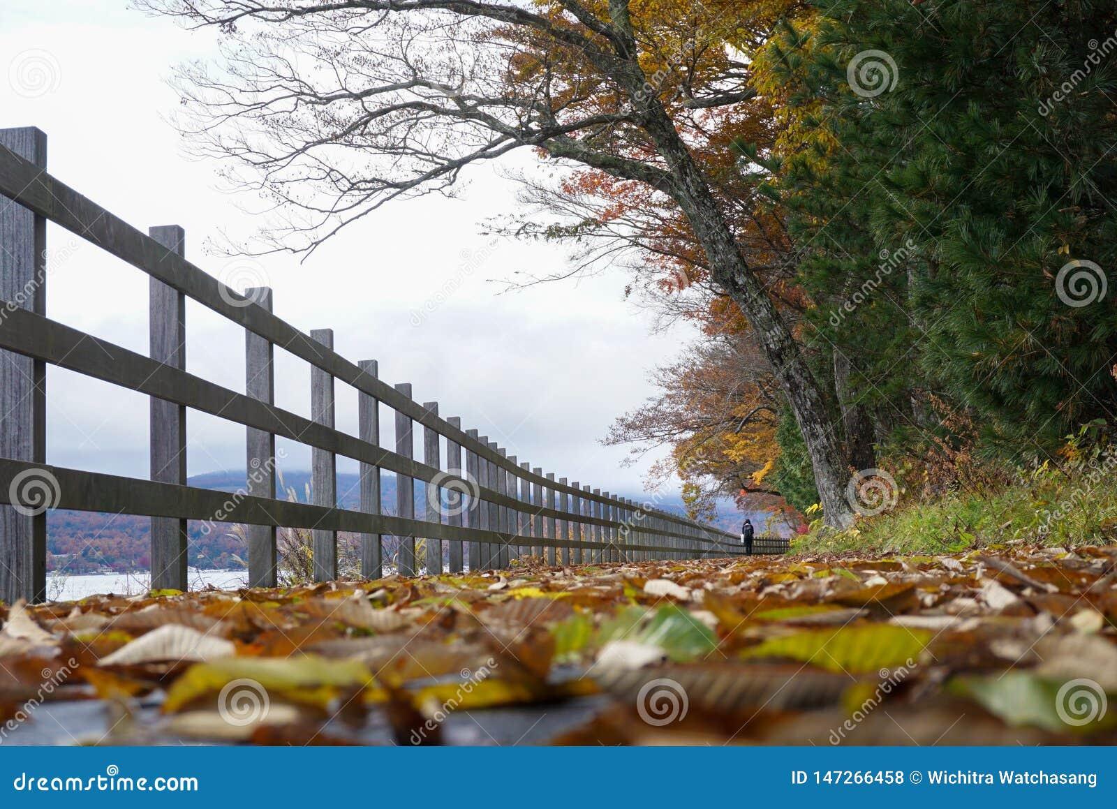 Traînées de marche au lac Yamanaka pendant la saison d automne du Japon