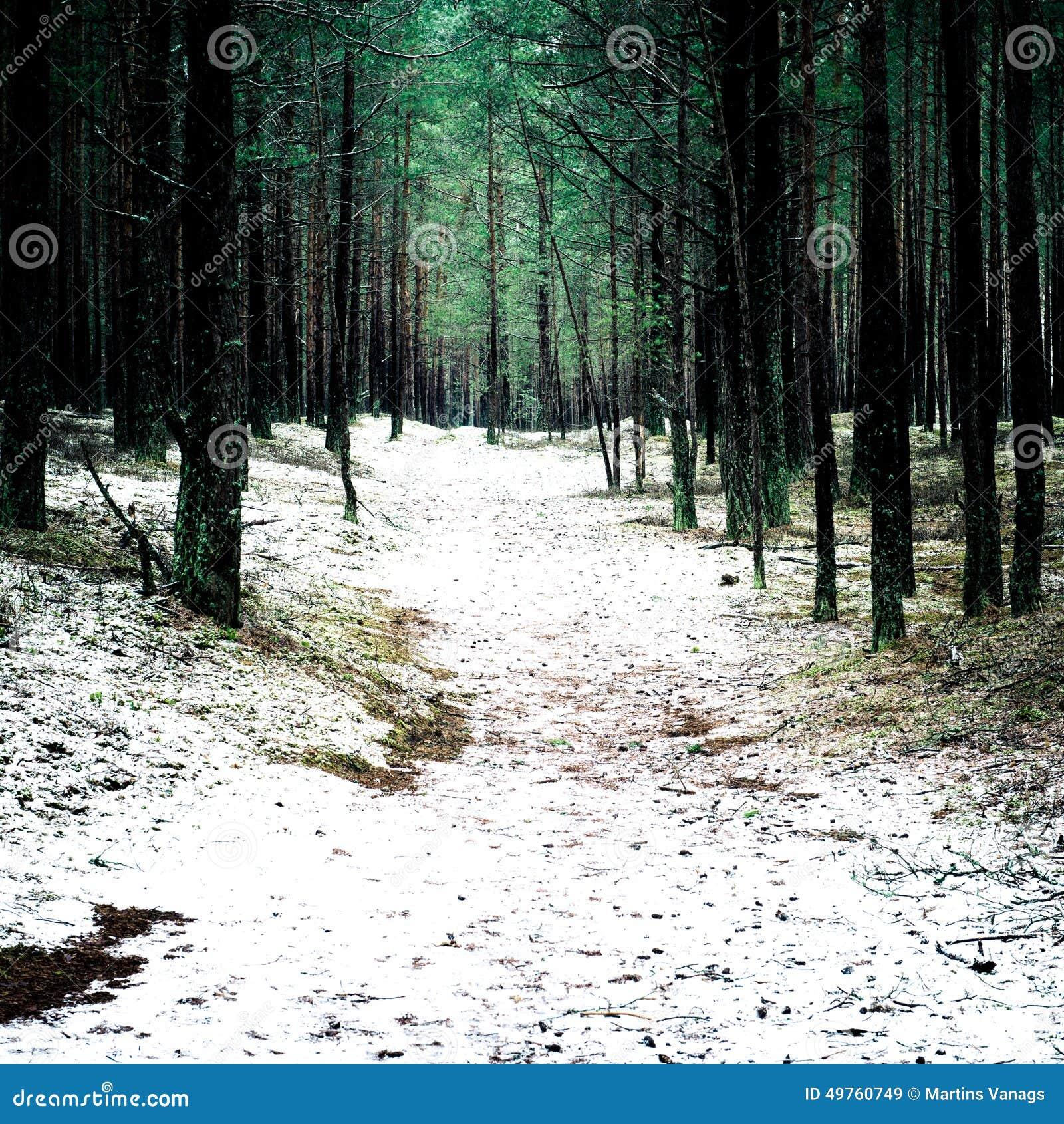 Traînez dans la forêt de pin d hiver - effe instantané de film de vintage