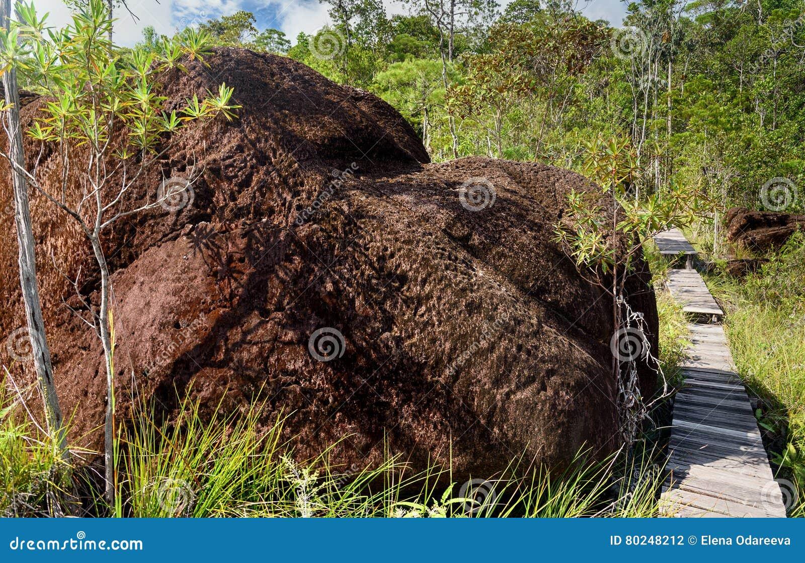 Traînez dans la forêt tropicale au parc national de Bako