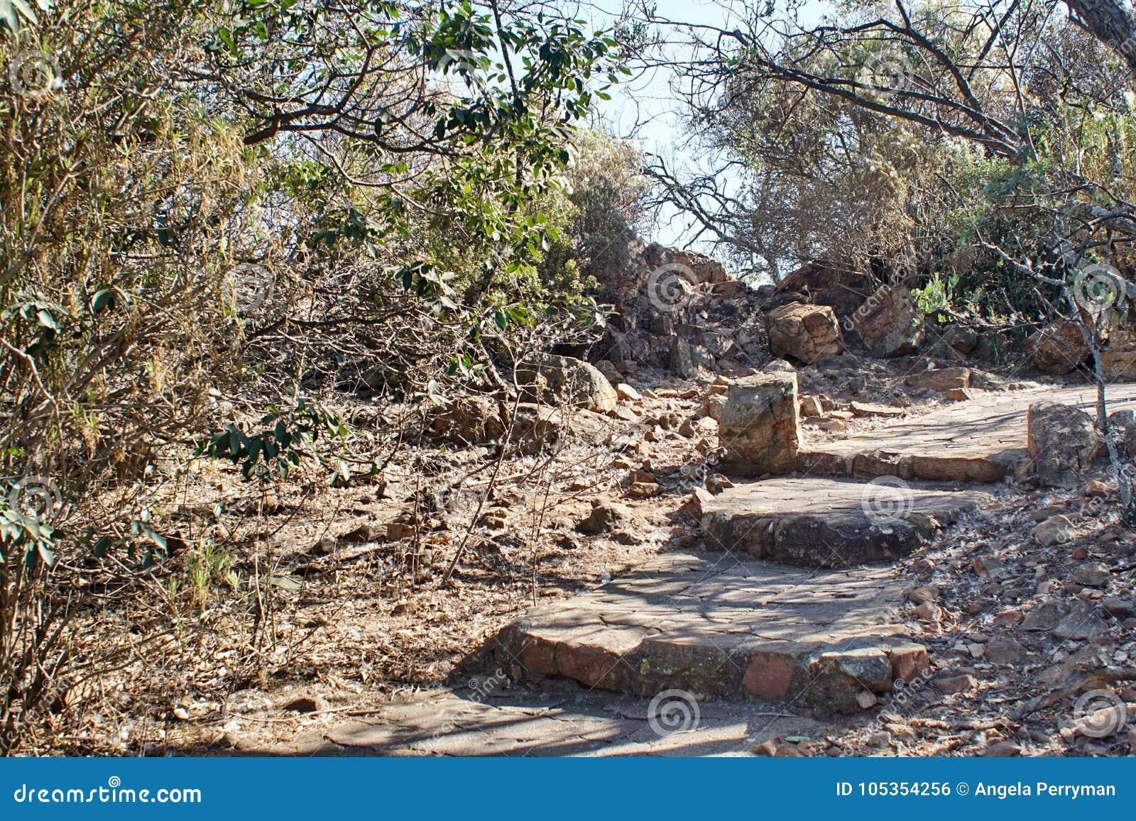 Traînez dans le jardin botanique à Pretoria, Afrique du Sud