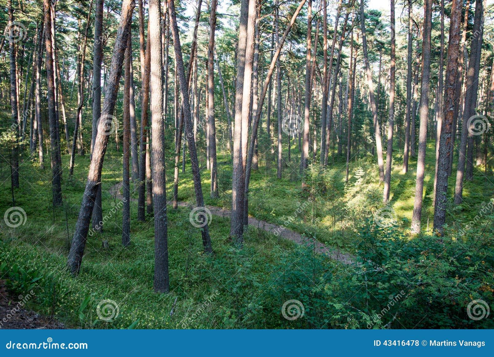 Traînez dans les bois près de la mer dans les dunes