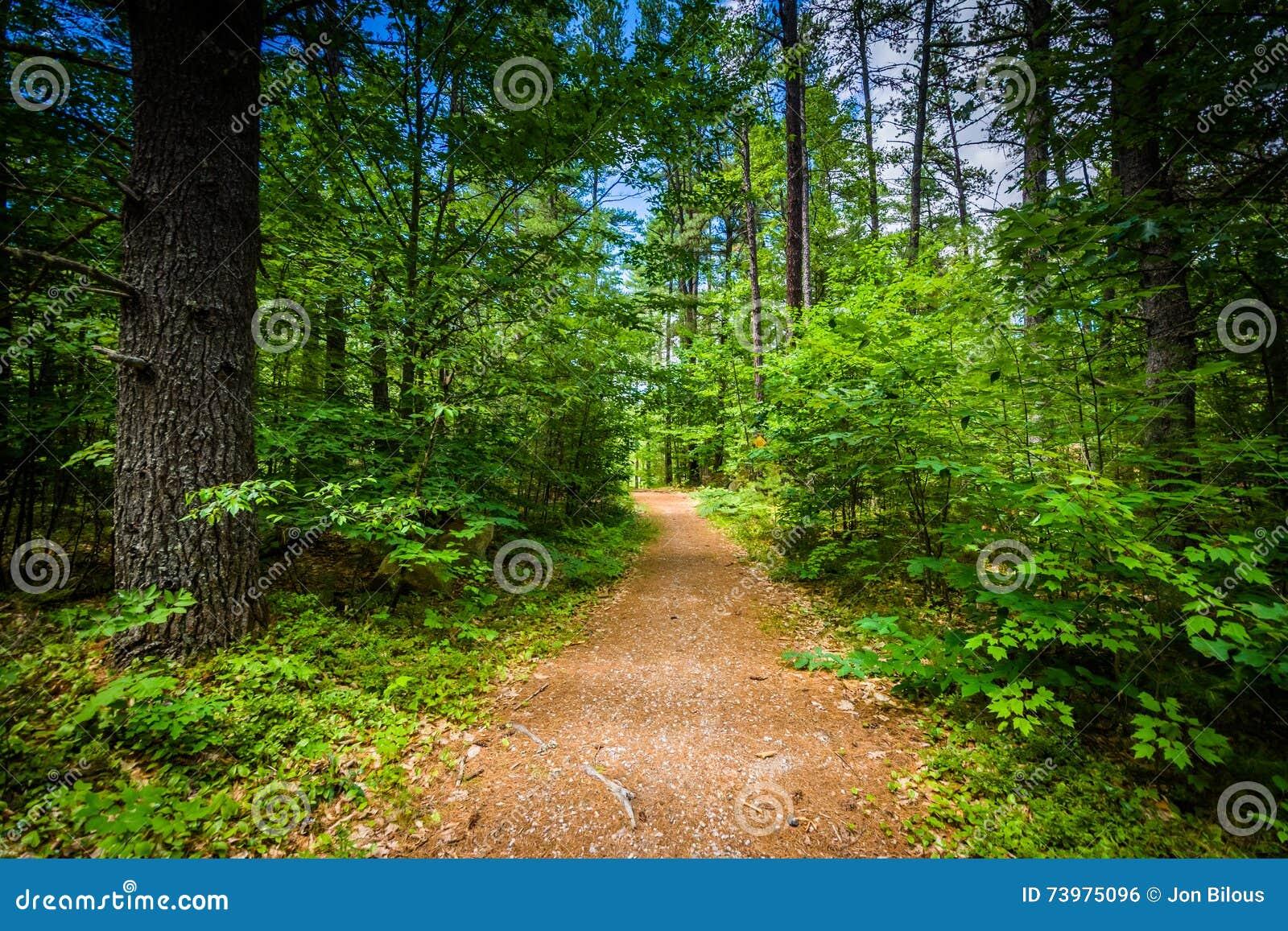 Traînez dans une forêt au parc d état de ruisseau d ours, New Hampshire