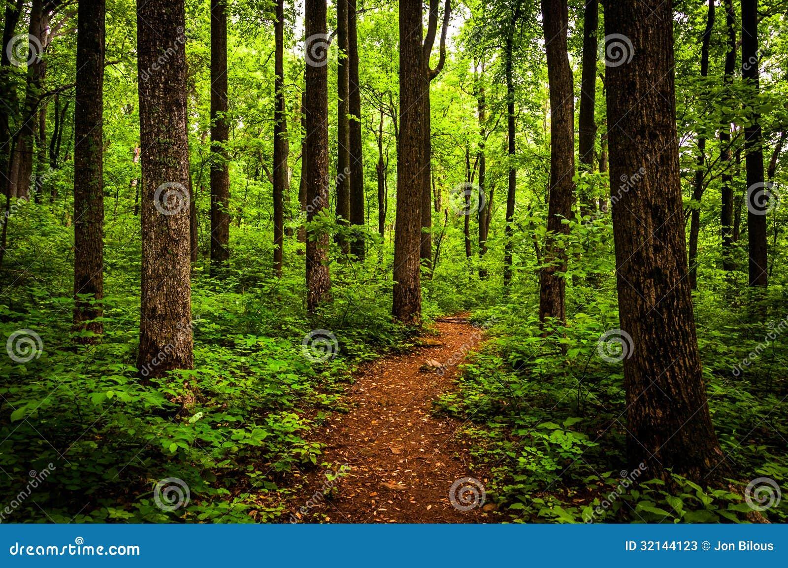 Traînez par les arbres grands dans une forêt luxuriante, parc national de Shenandoah