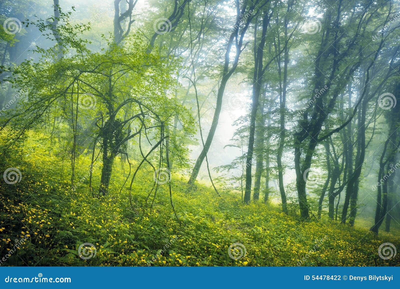 Traînez par une forêt foncée mystérieuse en brouillard