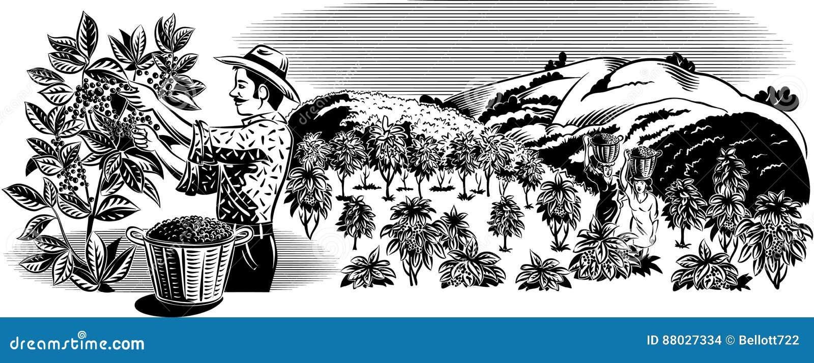 Trabajador del café en una plantación