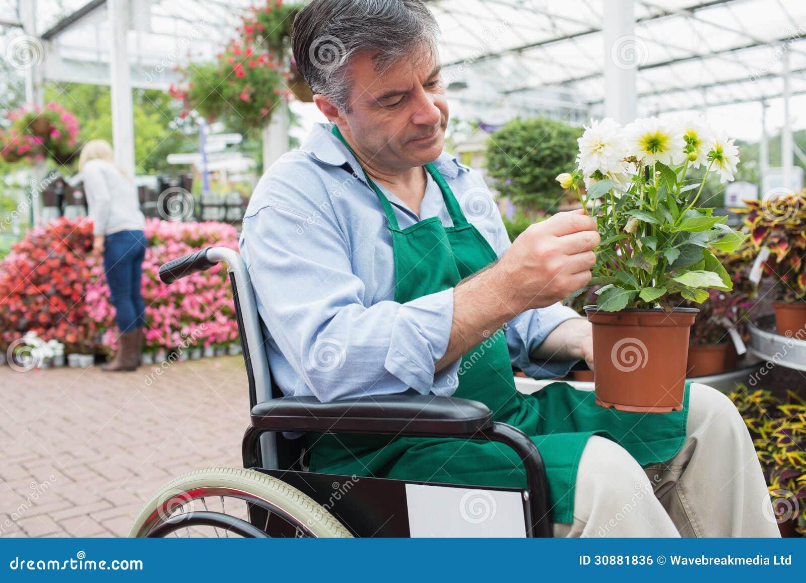 Trabajador del centro de jardinería en la silla de ruedas que sostiene la planta en conserva