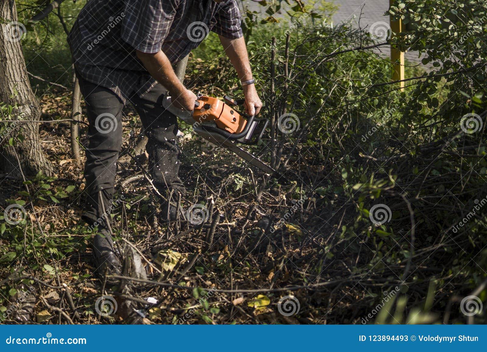Trabajador del maderero del leñador en árbol de la madera de la leña del corte en bosque con la motosierra anaranjada