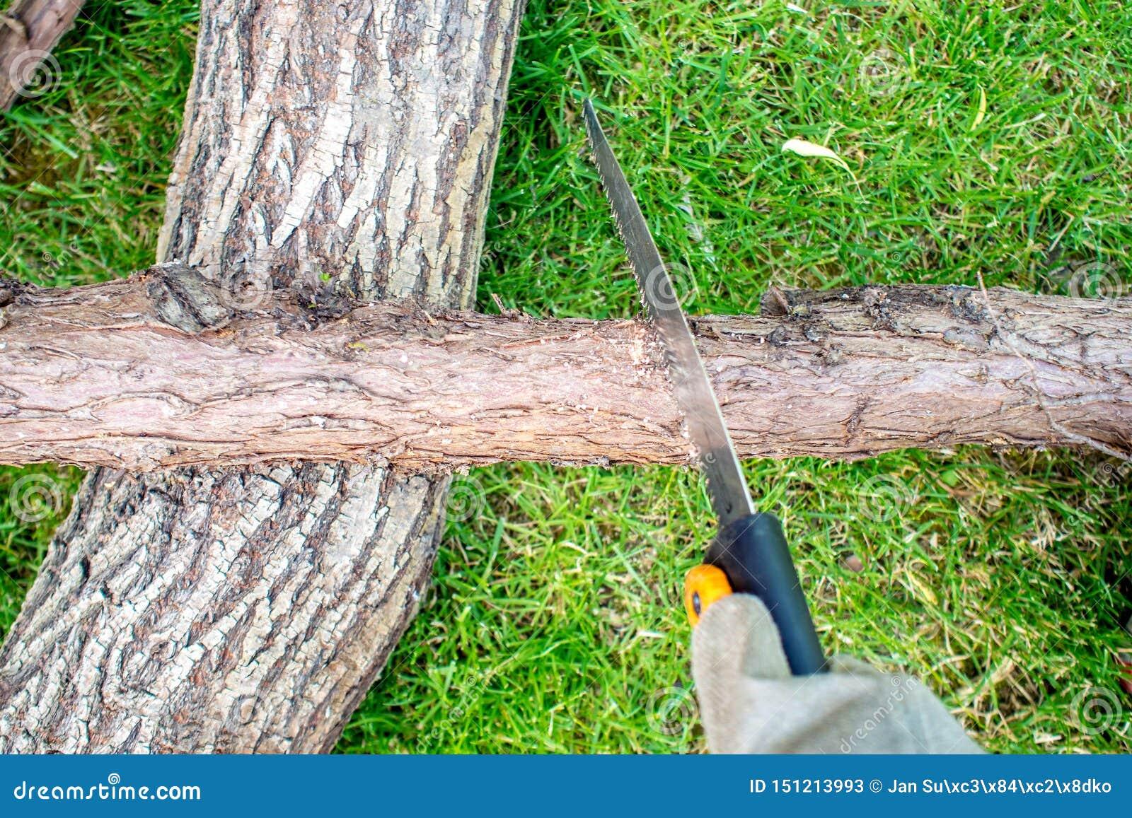 Trabajando en jardín, un mann que asierra un zoquete de la madera