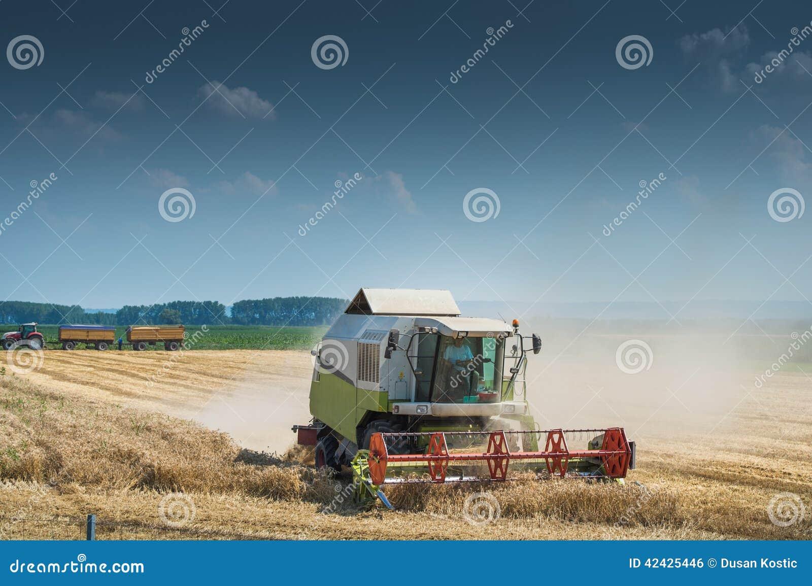 Trabajo cosechando la cosechadora