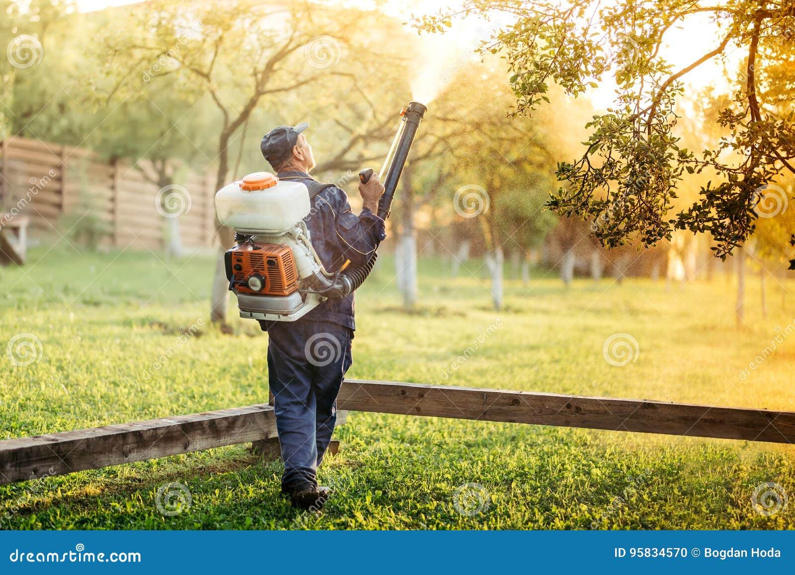 Trabalhador que usa o pulverizador para a distribuição orgânica do inseticida no pomar de fruto