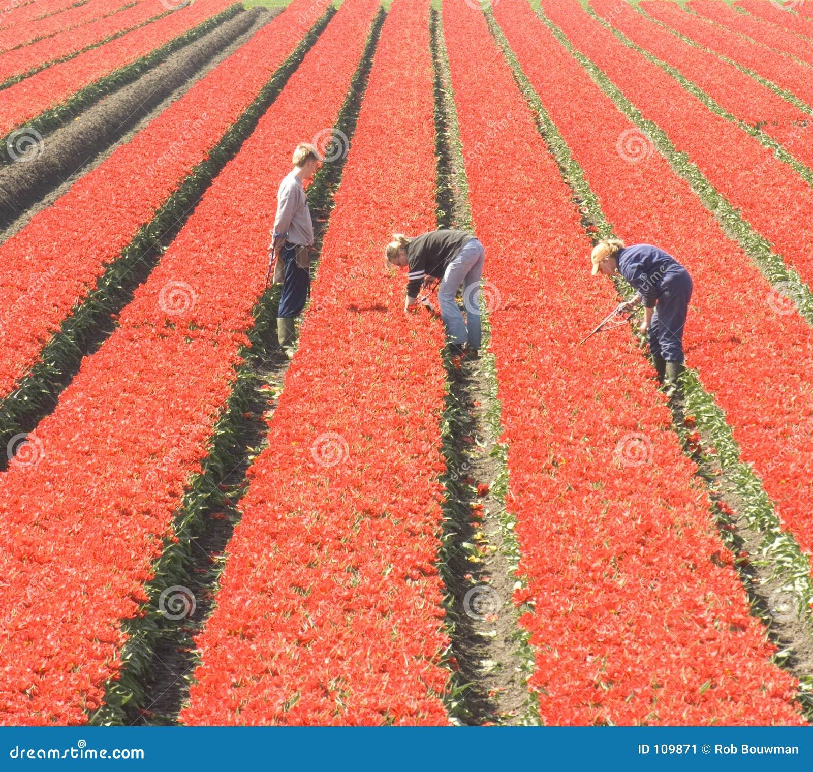 Trabalhadores no campo