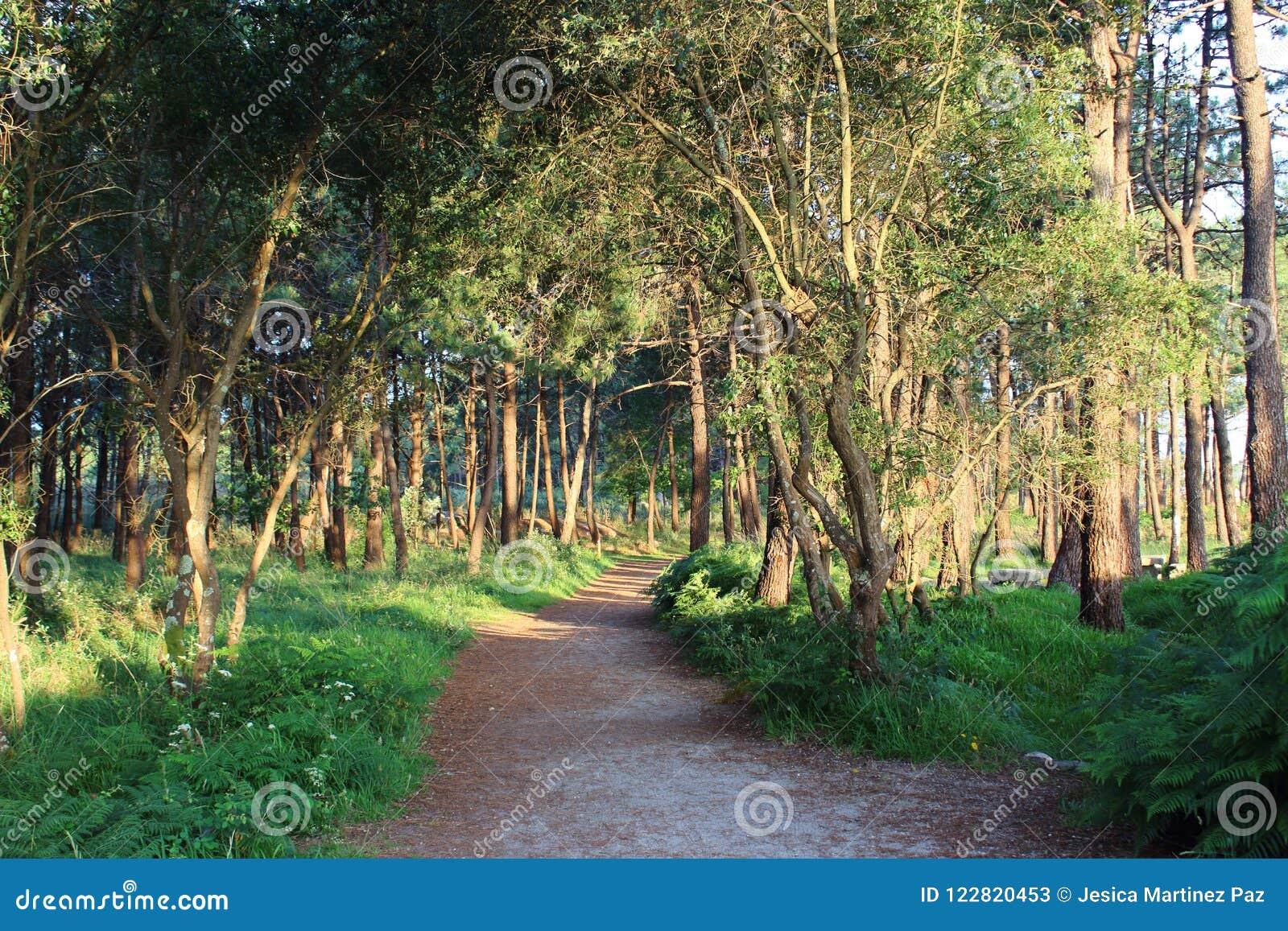 Traccia attraverso la foresta