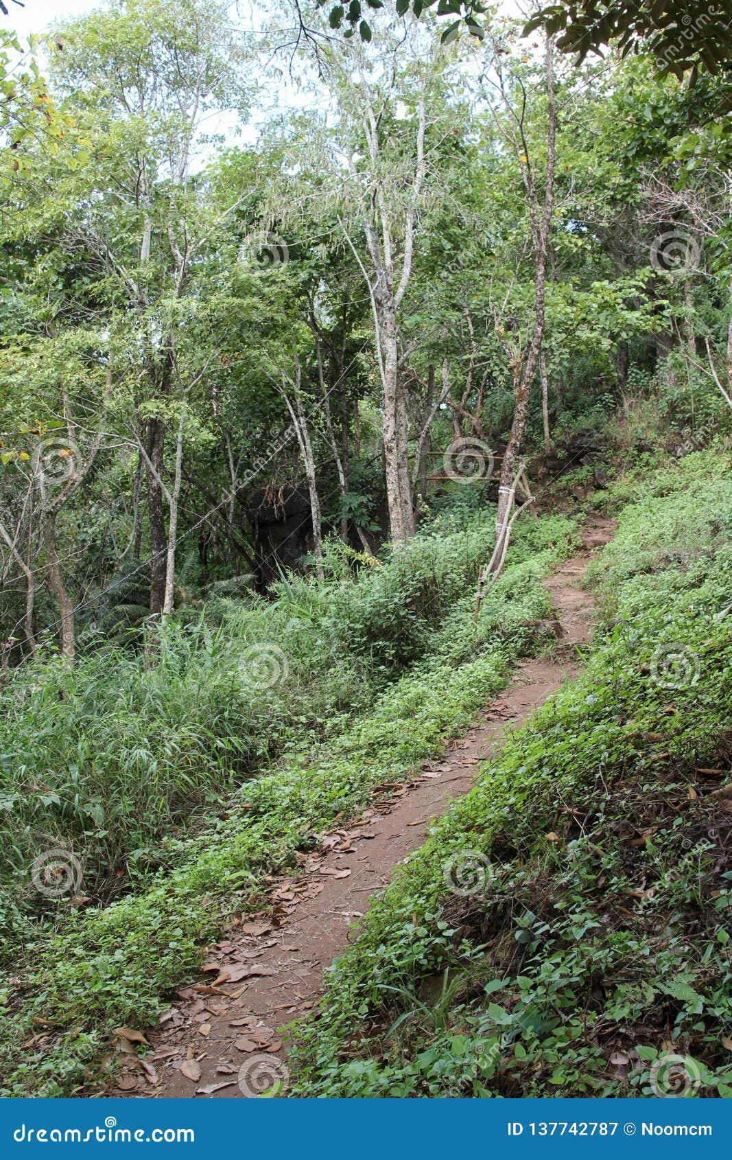 Traccia attraverso la foresta verde a DOI MON-NGO