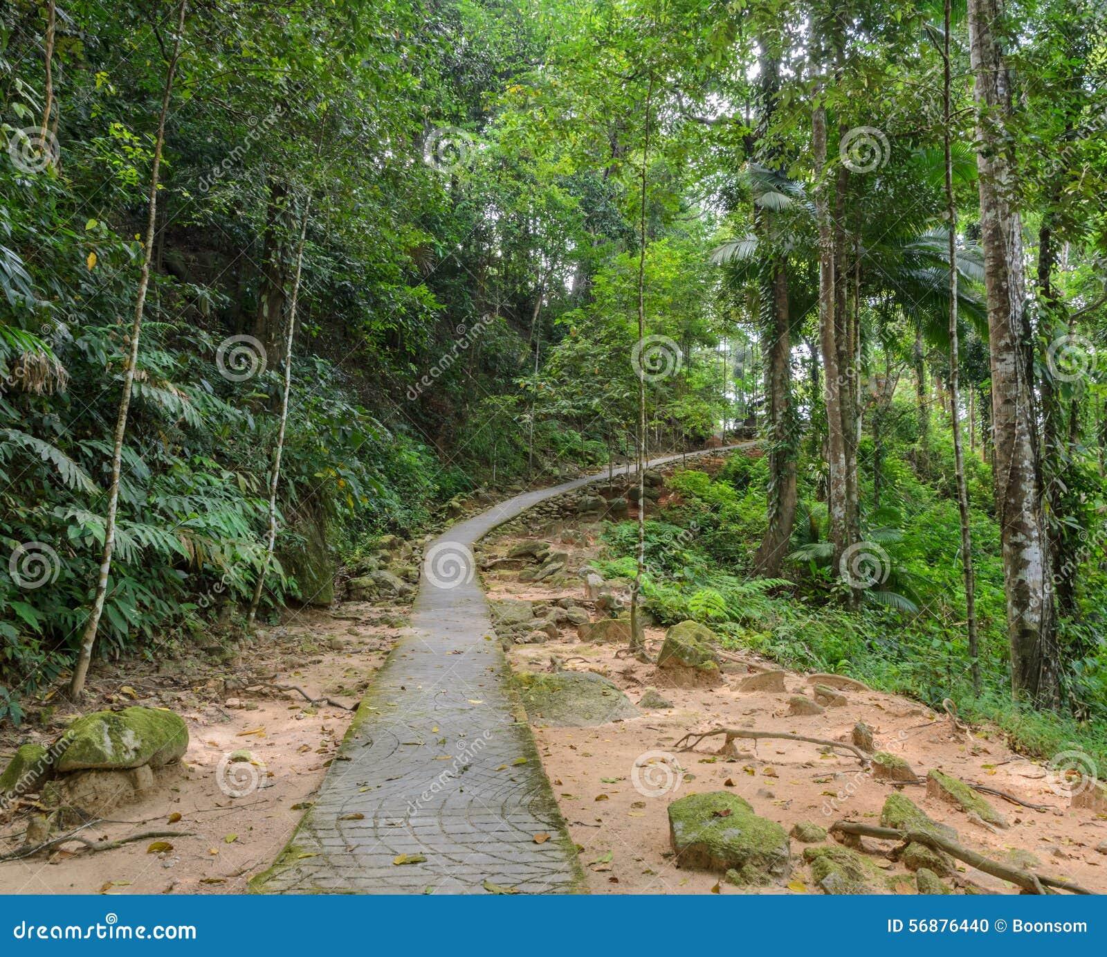 Traccia di escursione della foresta