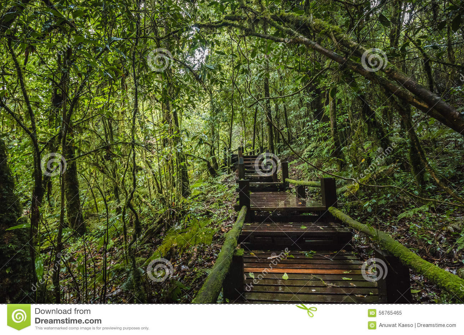 Traccia di Forest At Ang Ka Nature in Doi Inthanon