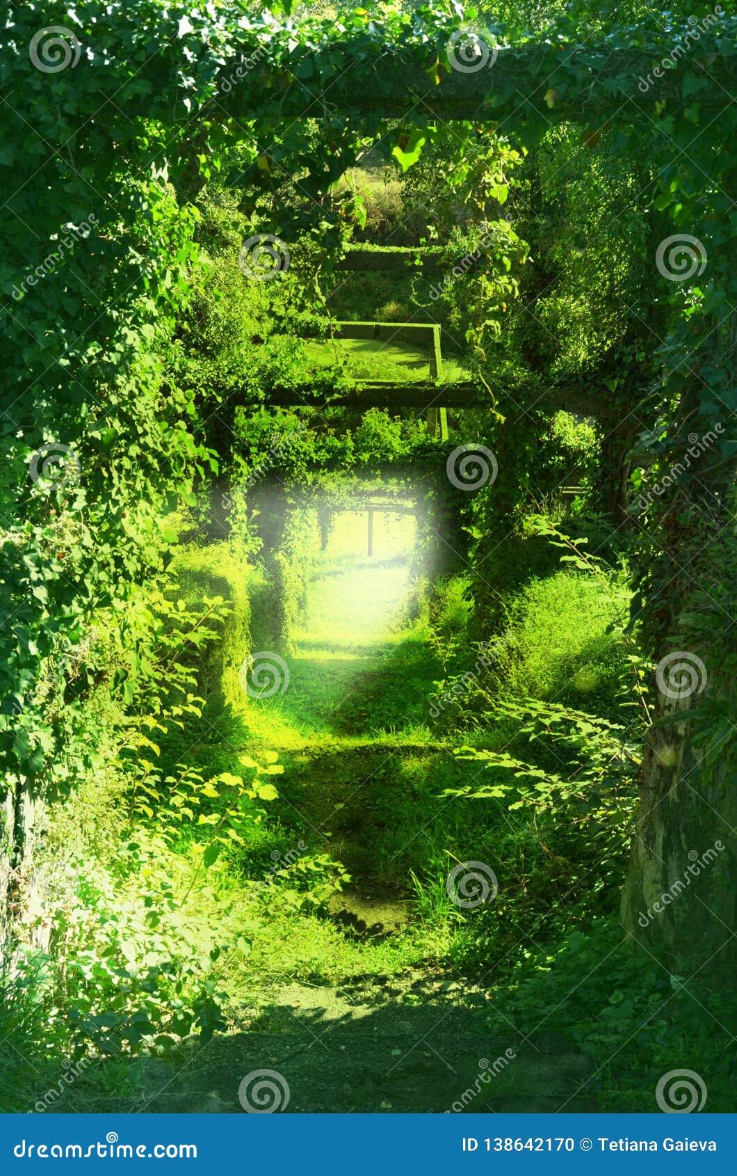 Traccia nei tunnel verdi dei rami degli alberi, erba, viti rampicanti immagine